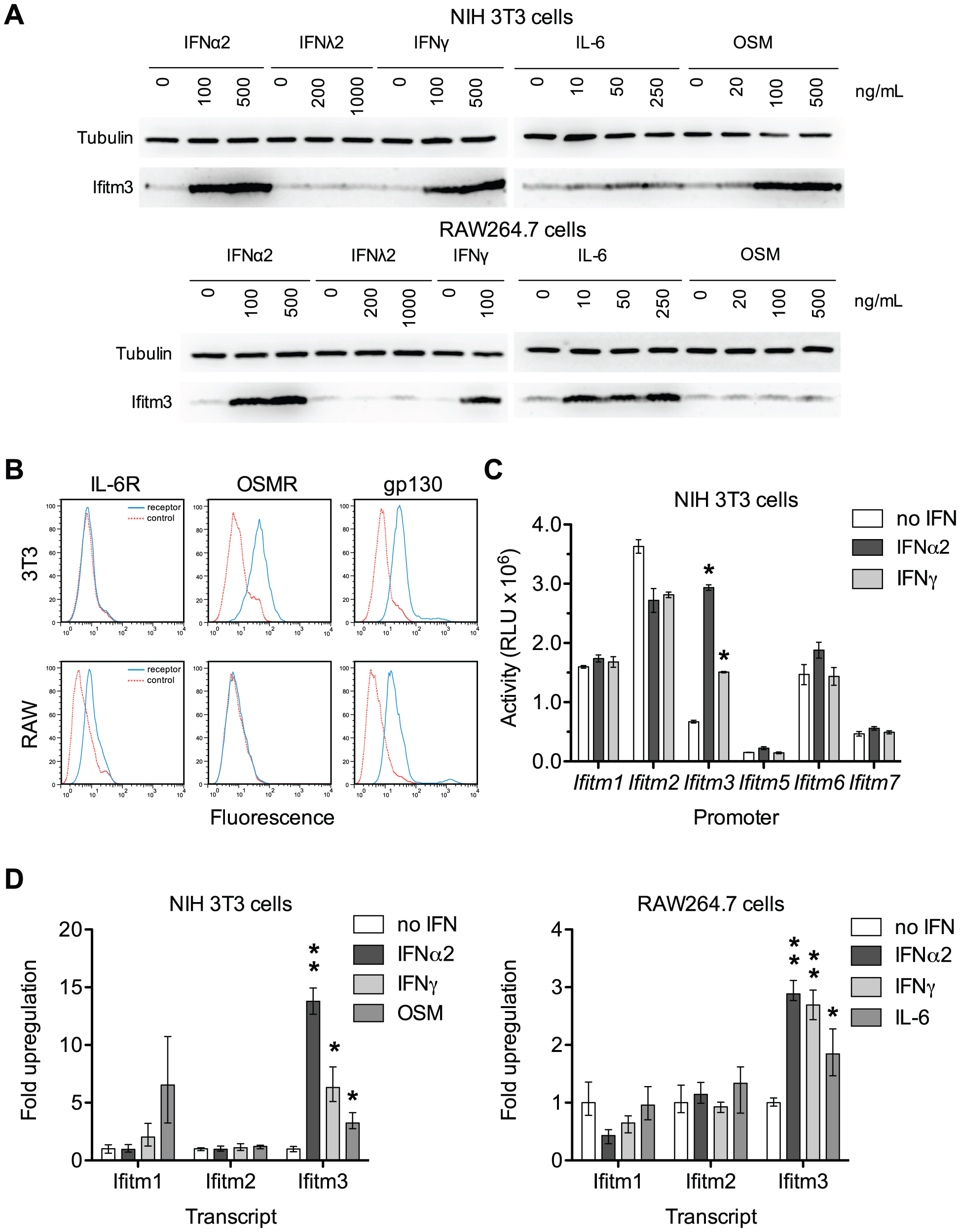 Both interferons and gp130-mediated cytokines induce Ifitm3 expression.