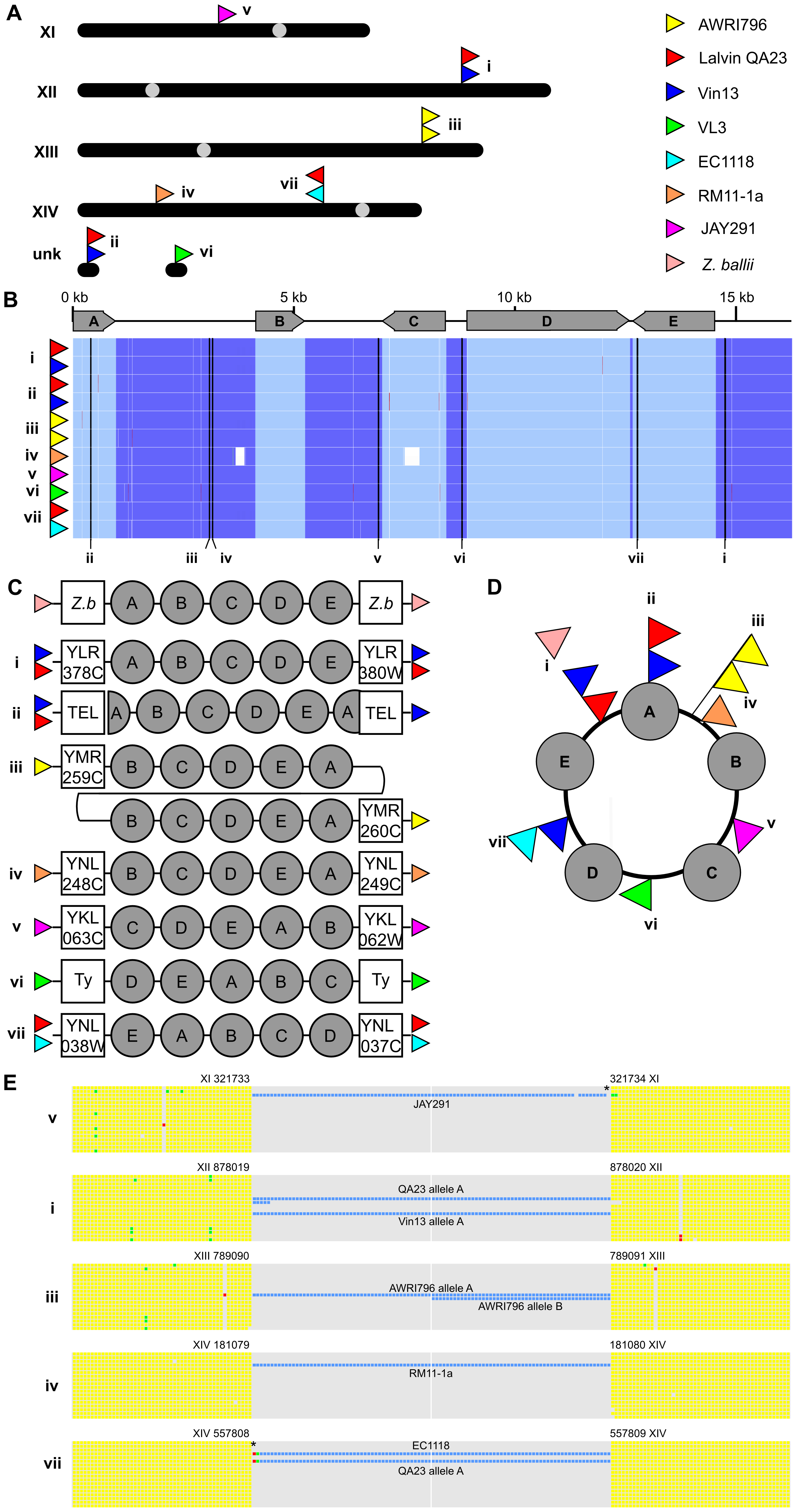 A divergent cluster of genes with a possible circular intermediate.