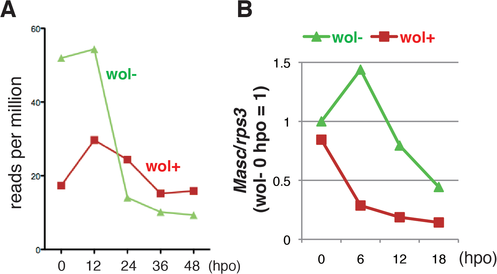 A marked decrease in <i>Masc</i> mRNA was observed in <i>Wolbachia</i>-infected embryonic <i>Ostrinia</i>.
