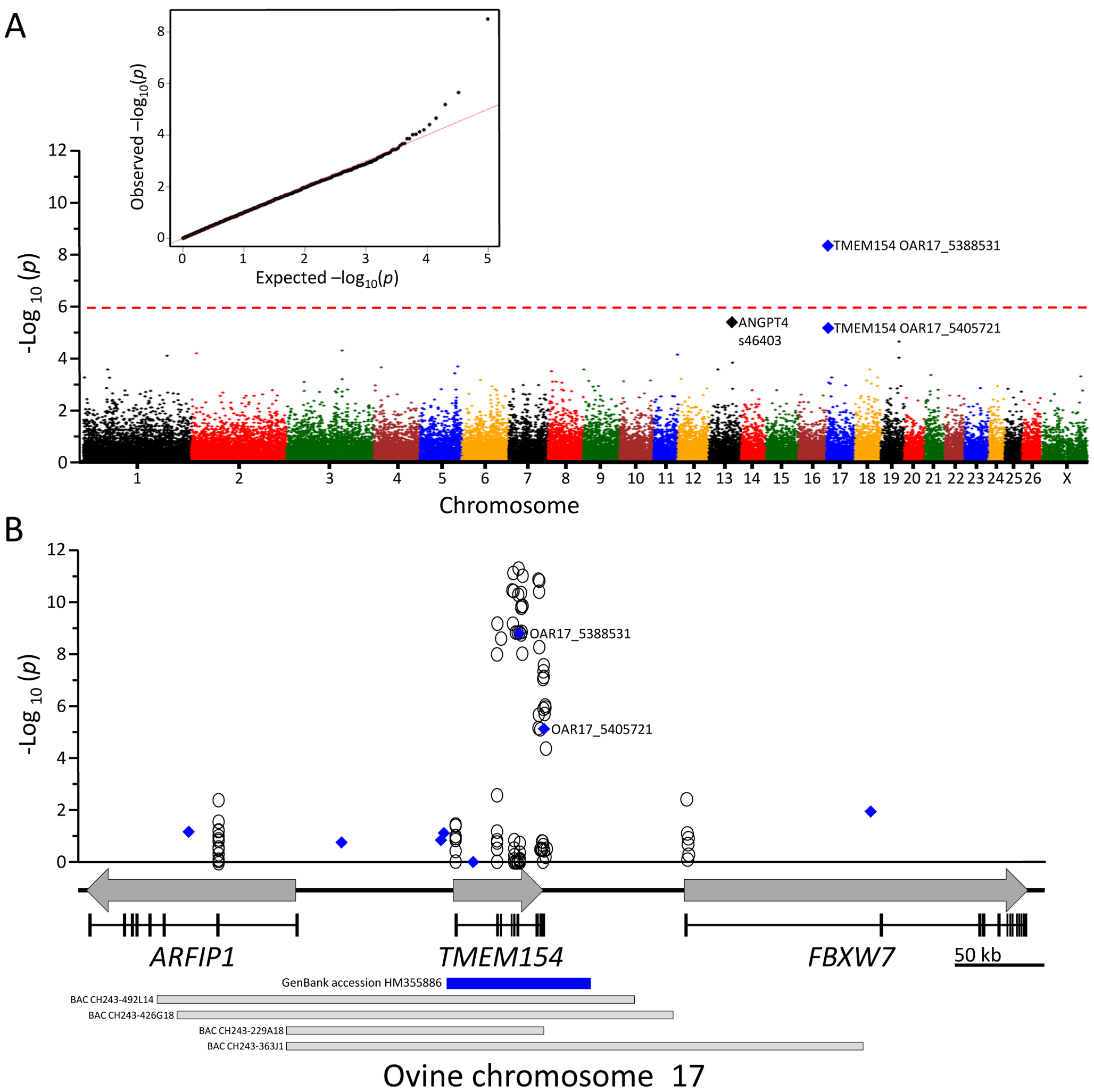 GWAS and fine-mapping of <i>TMEM154</i>.