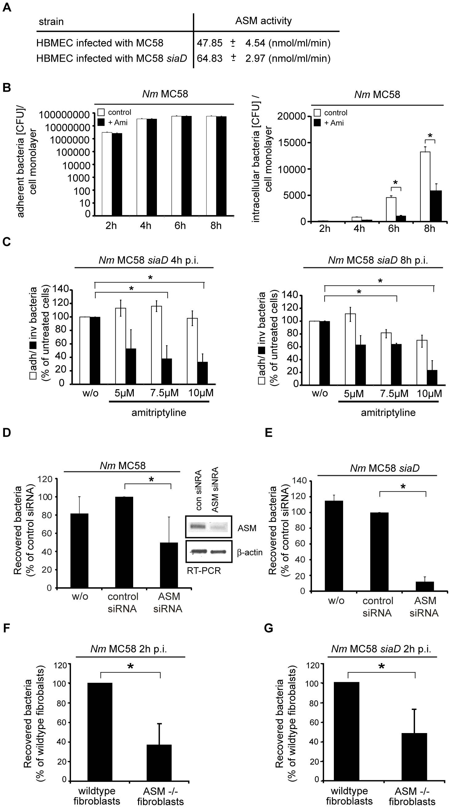 Inhibition of acid sphingomyelinase prevents <i>N. meningitidis</i> uptake by host cells.