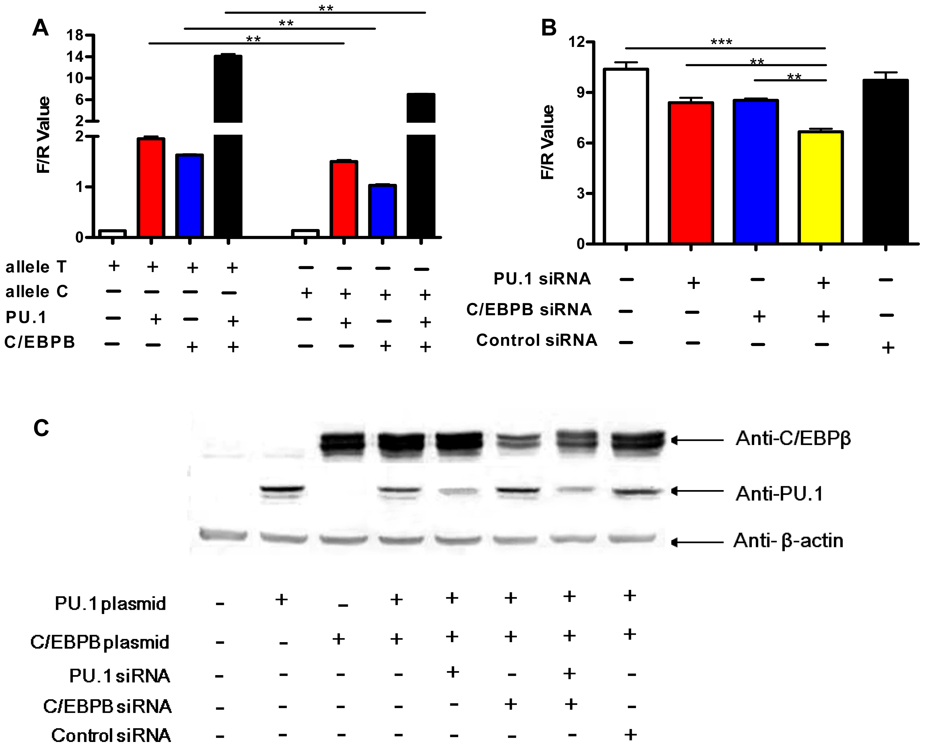 Allele-specific effects of rs1143627 are mediated through PU.1 and C/EBPβ.