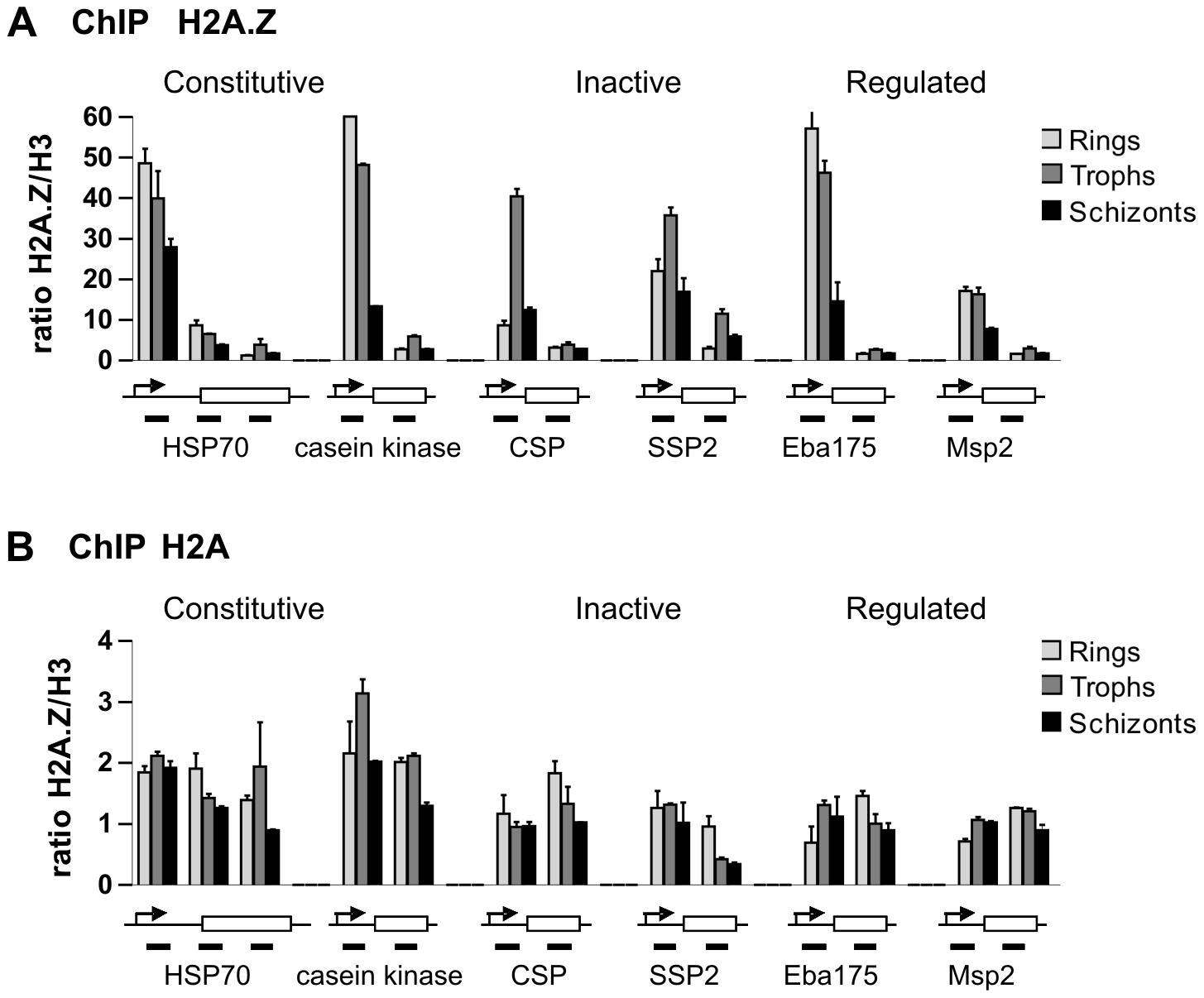 ChIP analysis of genomic PfH2A.Z distribution shows enrichment near the transcription start site (TSS).