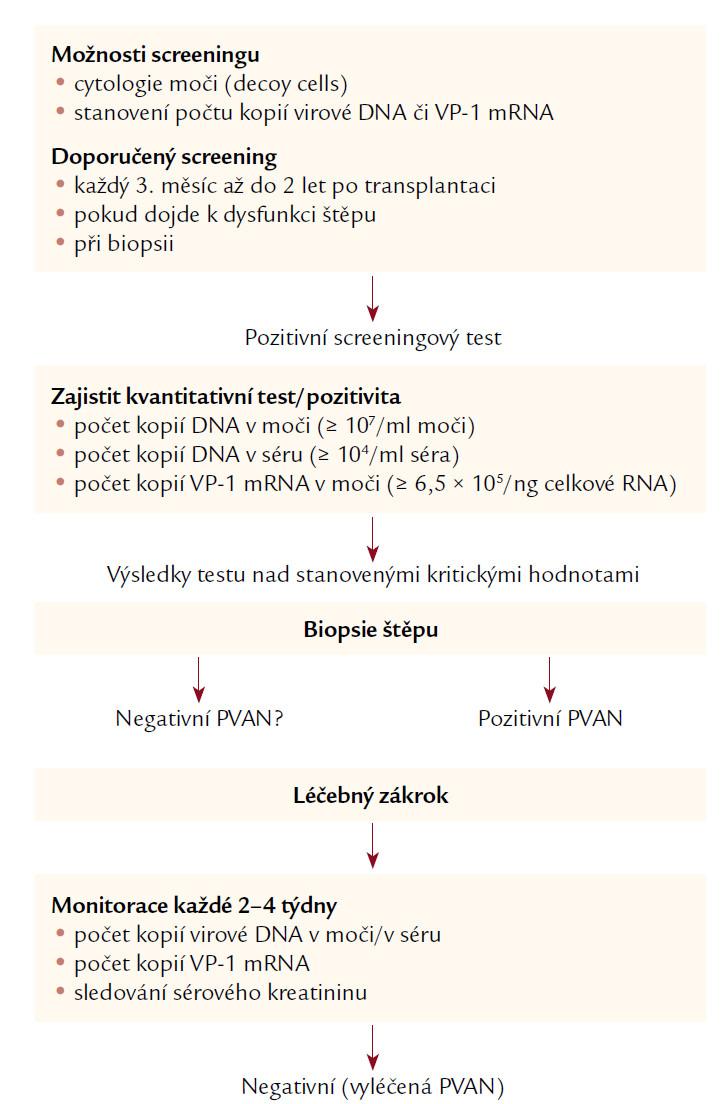 Schéma 1. Polyomavirová replikace: screening a monitorace. Podle [18].