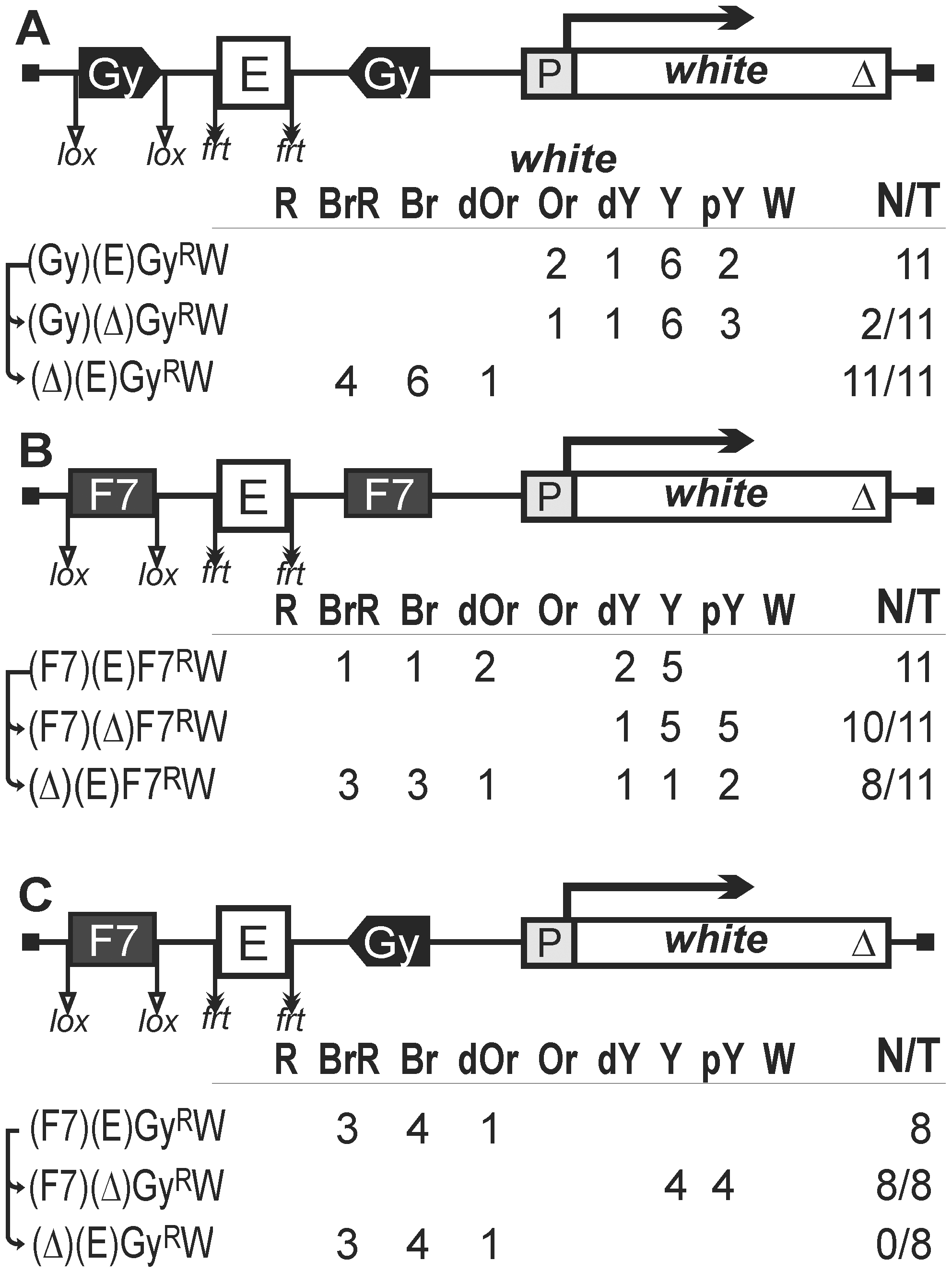 Testing functional interactions between <i>gypsy</i> and Fab-7 insulators.