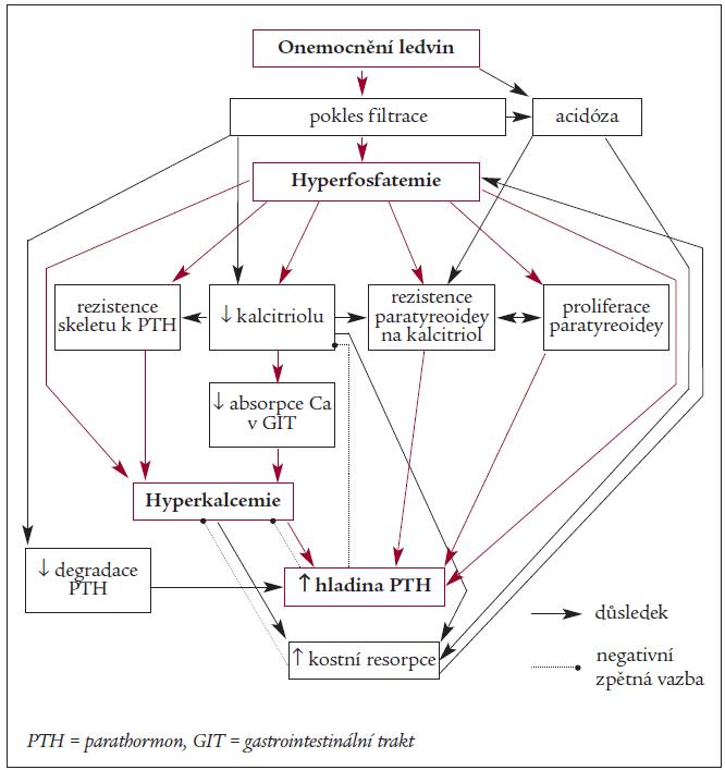 Schéma. Důsledky hyperfosfatemie při onemocnění ledvin.