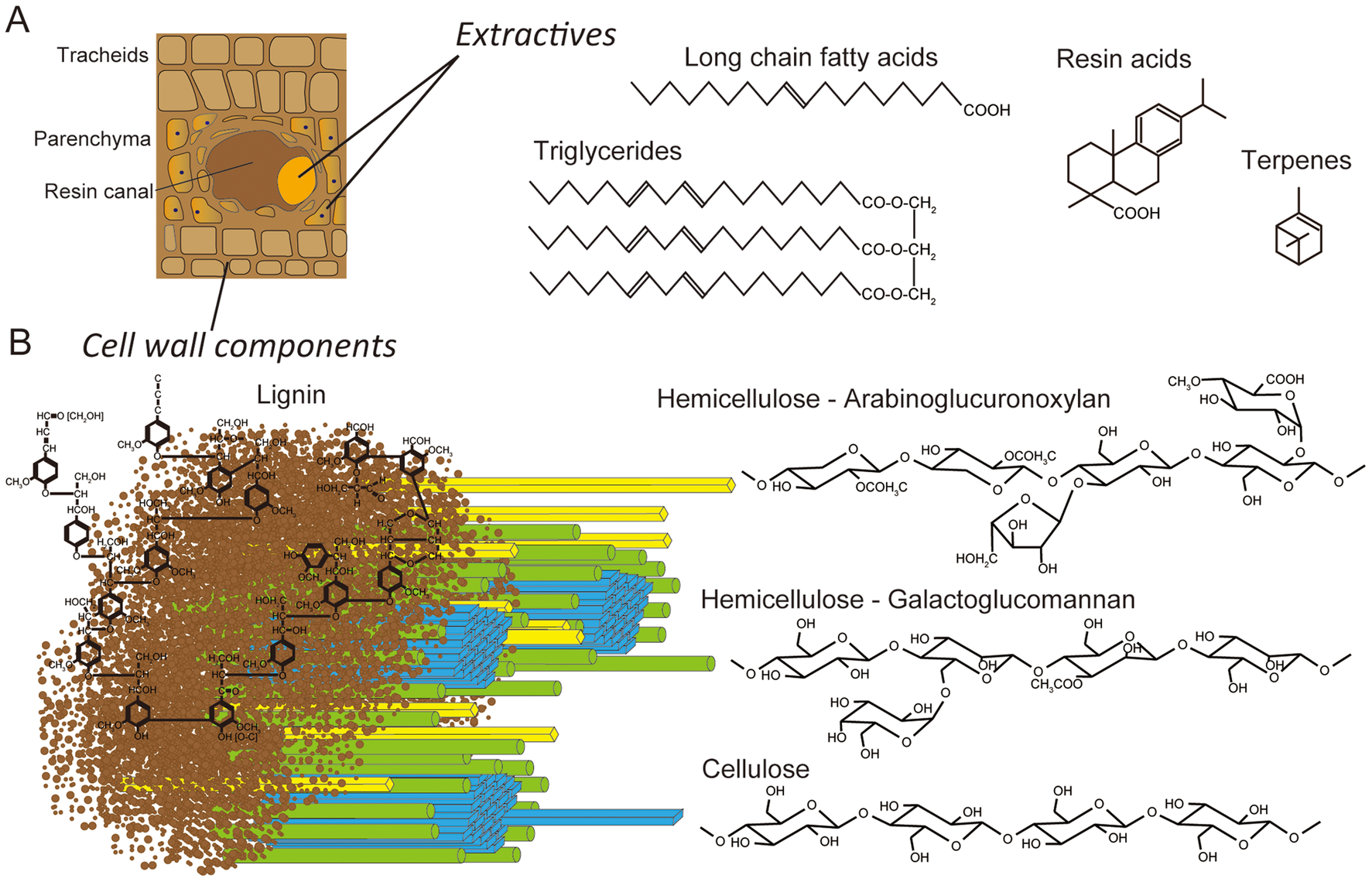Schematic representations of lignocellulose components in cell walls of pine wood.