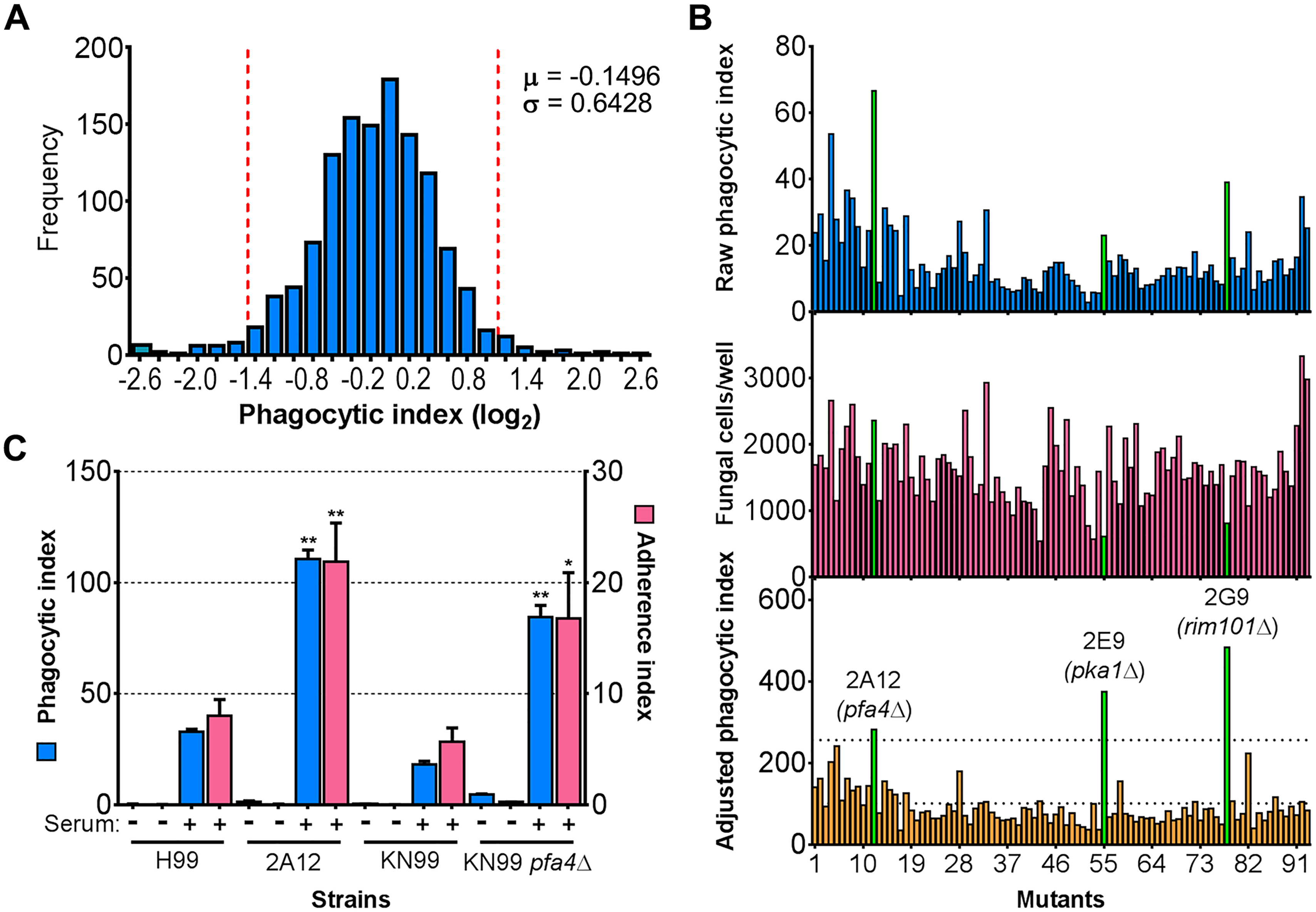 Identification of cryptococcal mutants with altered interactions with macrophages.