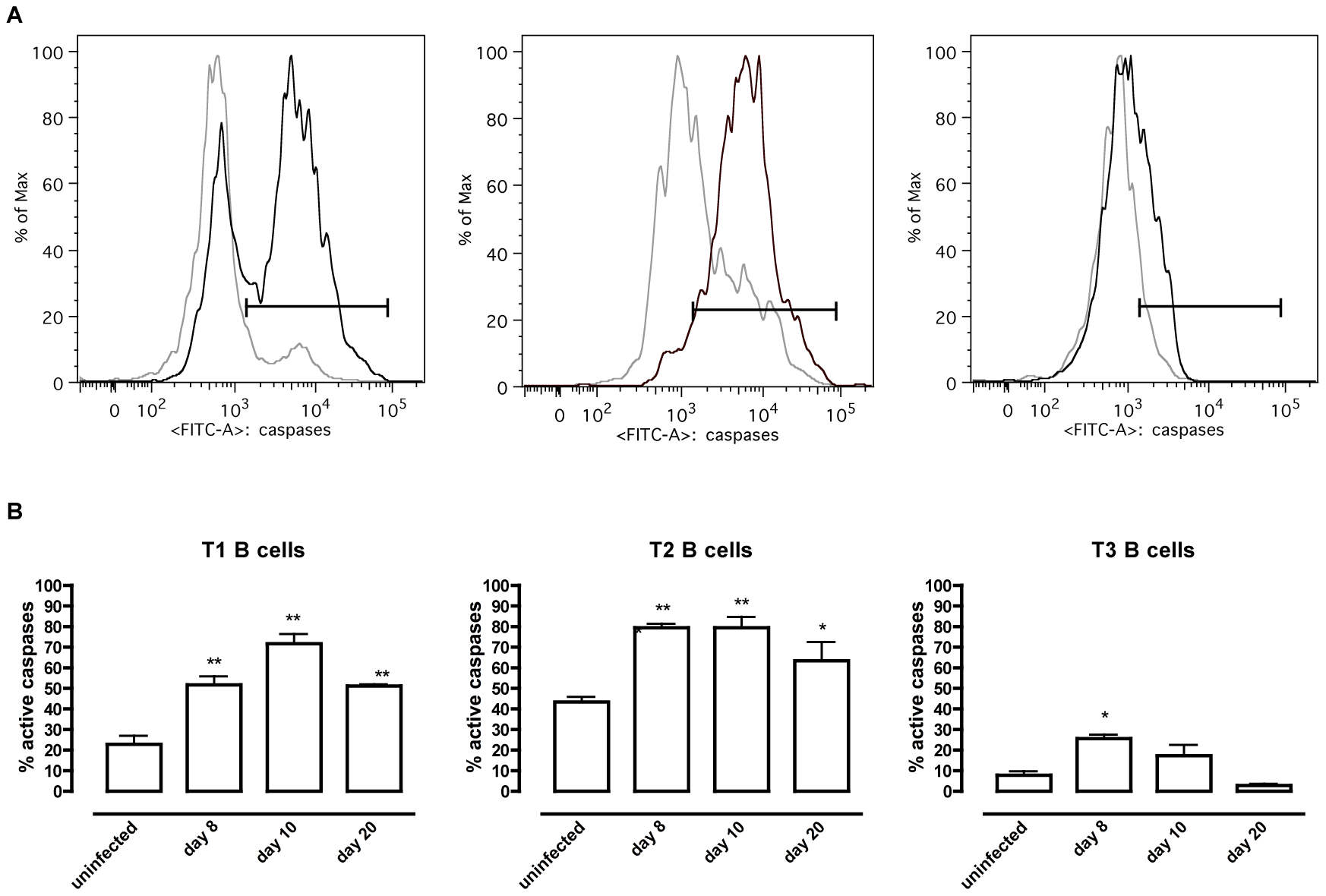 <i>T. brucei</i> infection-induced apoptosis of transitional B cells.
