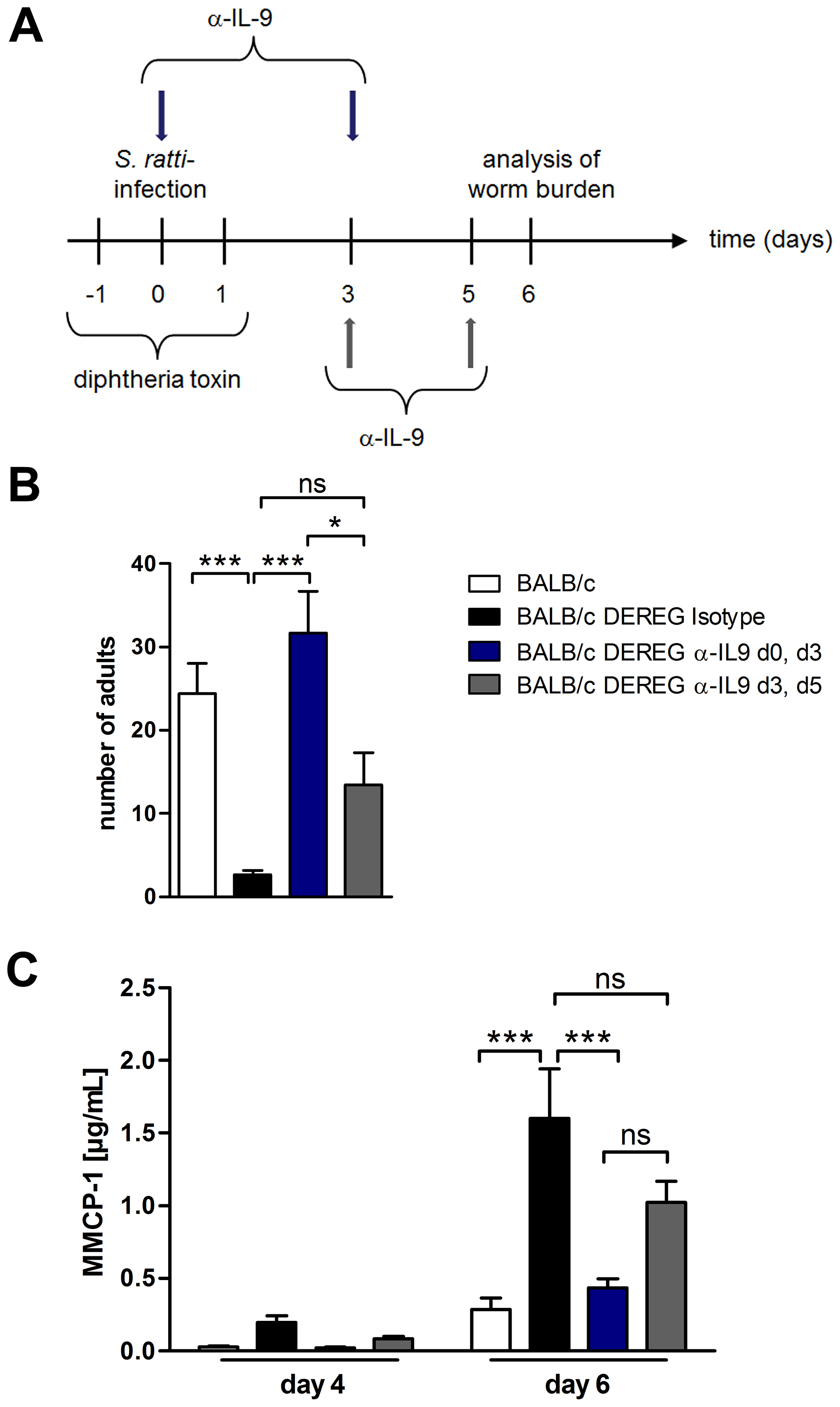 Depletion of IL-9 during <i>S. ratti</i> infection in BALB/c DEREG mice at different time points.