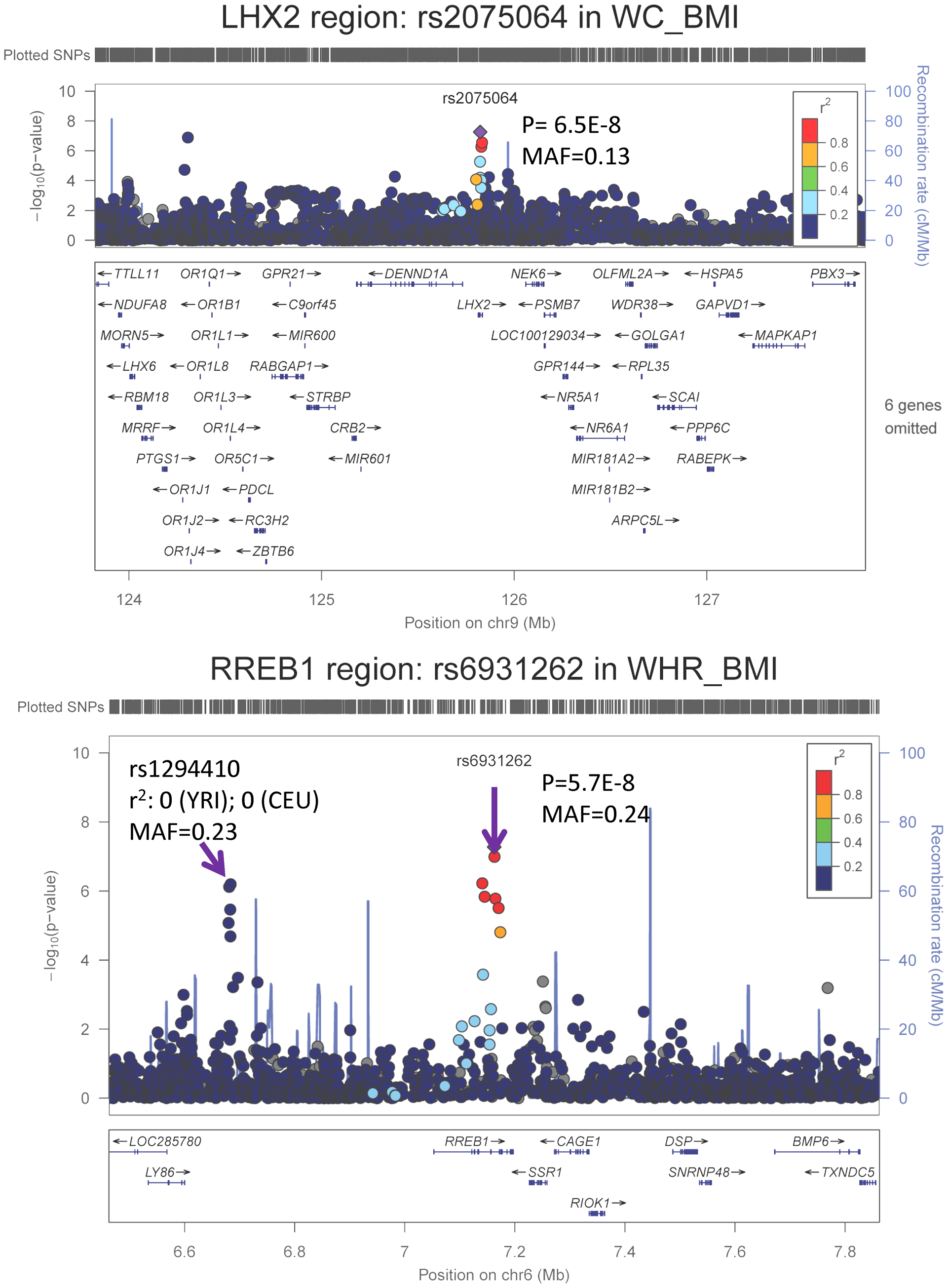 Regional association plots based on single GC-corrected p-value for <i>LHX2</i> and <i>RREB1</i>, Stage 1 only.