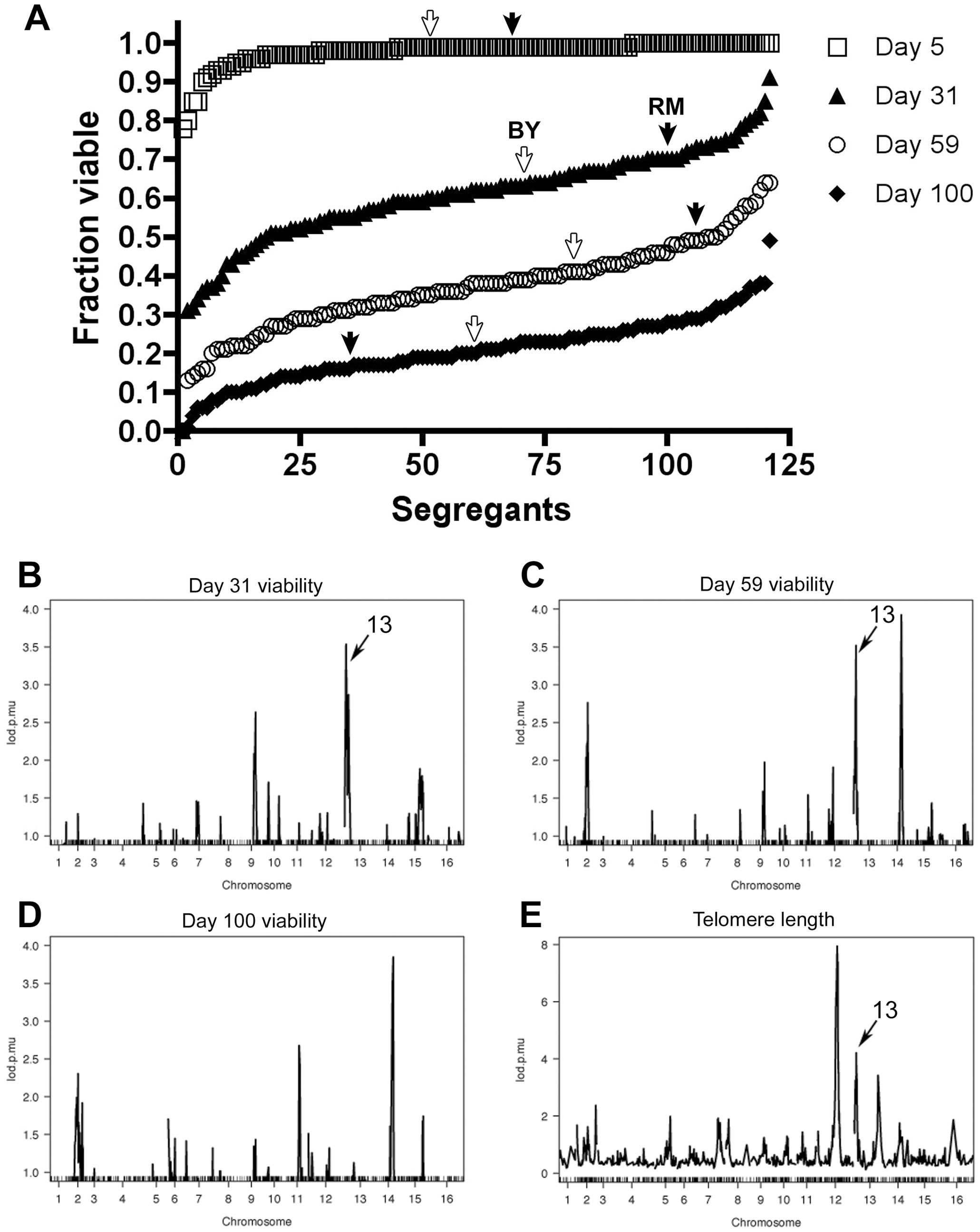 Genomic linkage of chronological lifespan in <i>S. cerevisiae</i> segregants.