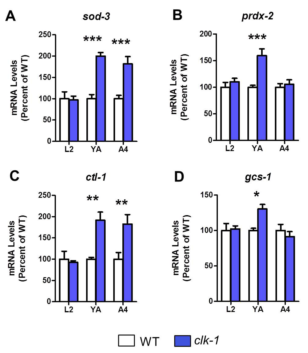 Antioxidant genes become upregulated in adult <i>clk-1</i> worms.