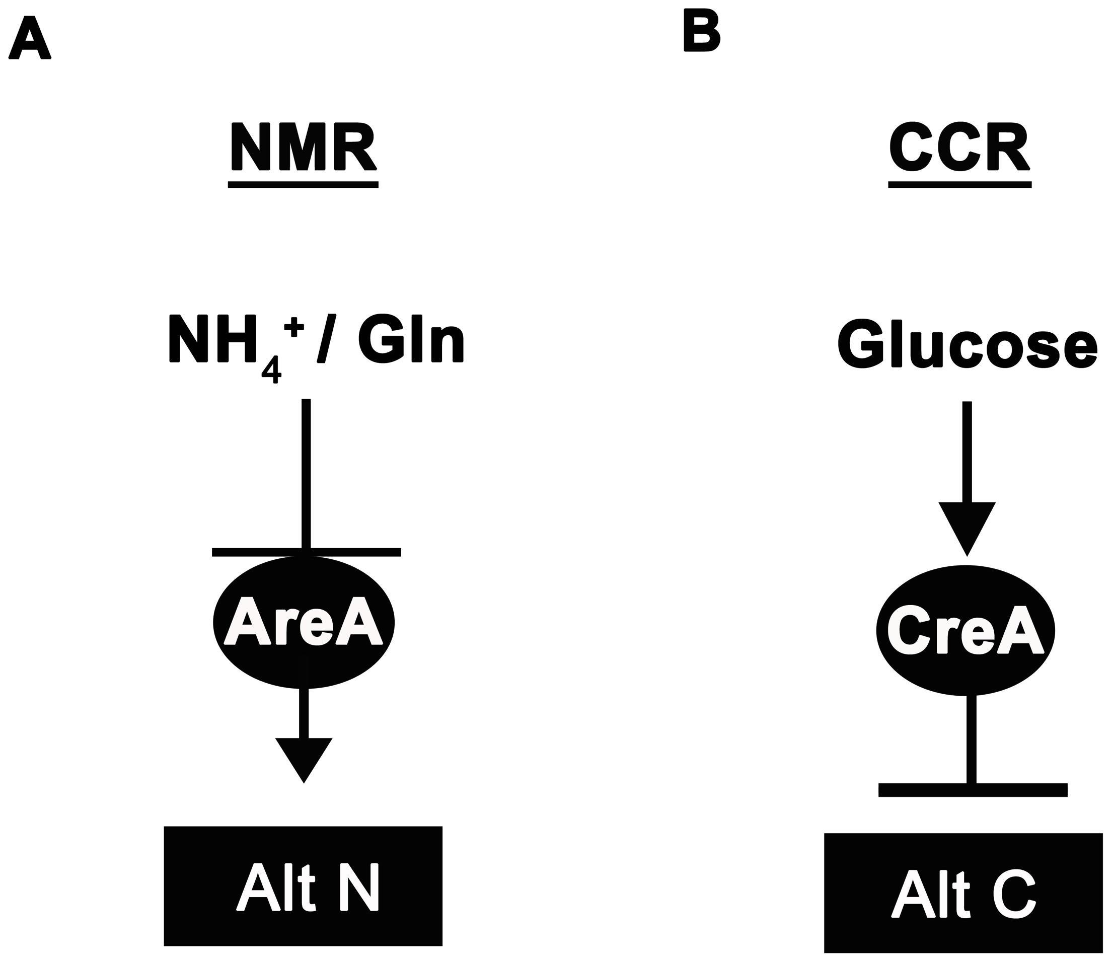 Ammonium and glucose are preferred nitrogen and carbon sources in filamentous fungi.