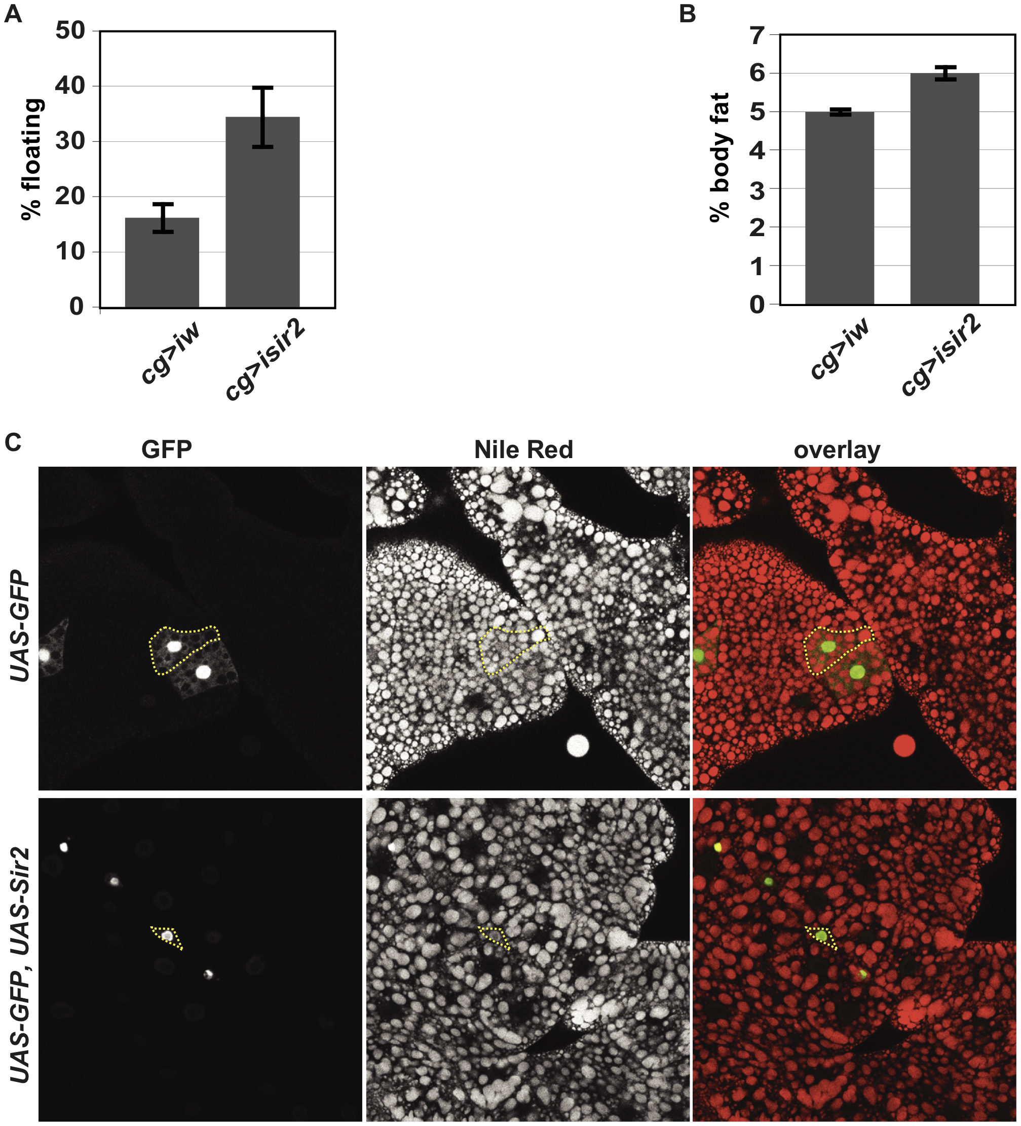 FB-specific manipulation of <i>Sir2:</i> knockdown increases organismal fat, whereas overexpression depletes lipid stores.
