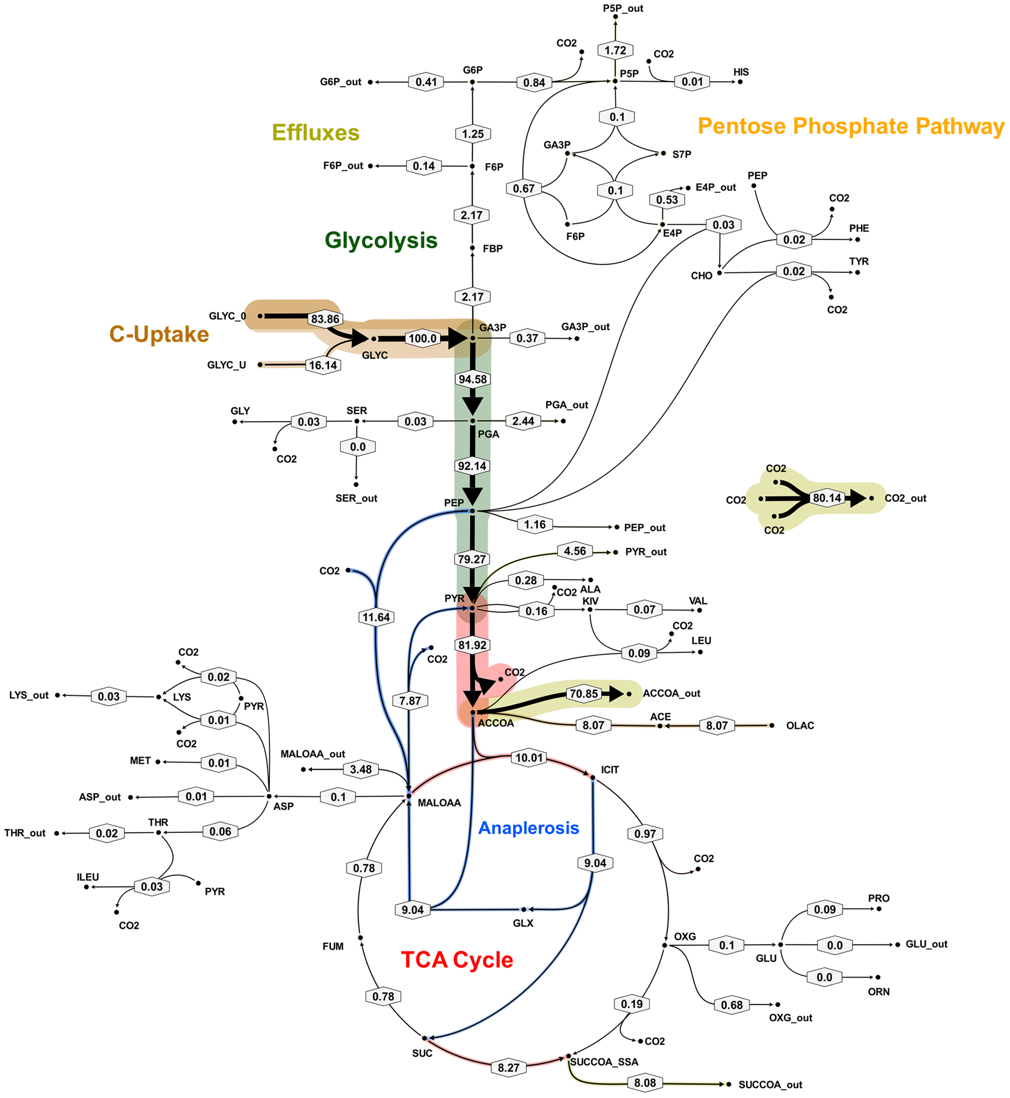 Metabolic flux map B for <i>M. bovis</i> BCG in glycerol limited continuous culture at slow growth rate (t<sub>d</sub>=69 h).