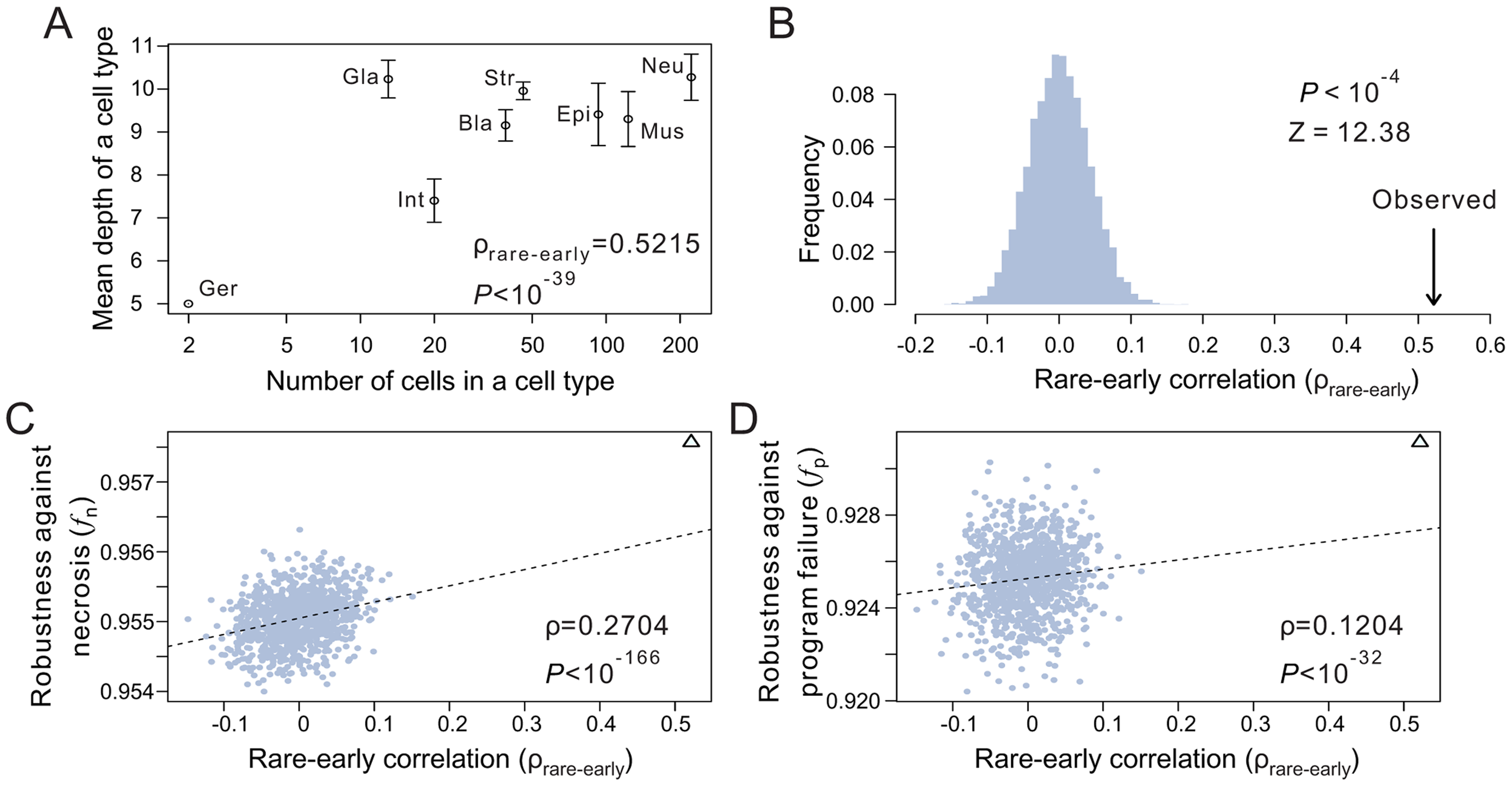 The tendency for rare cells to have low depths improves the robustness of the <i>C. elegans</i> lineage.