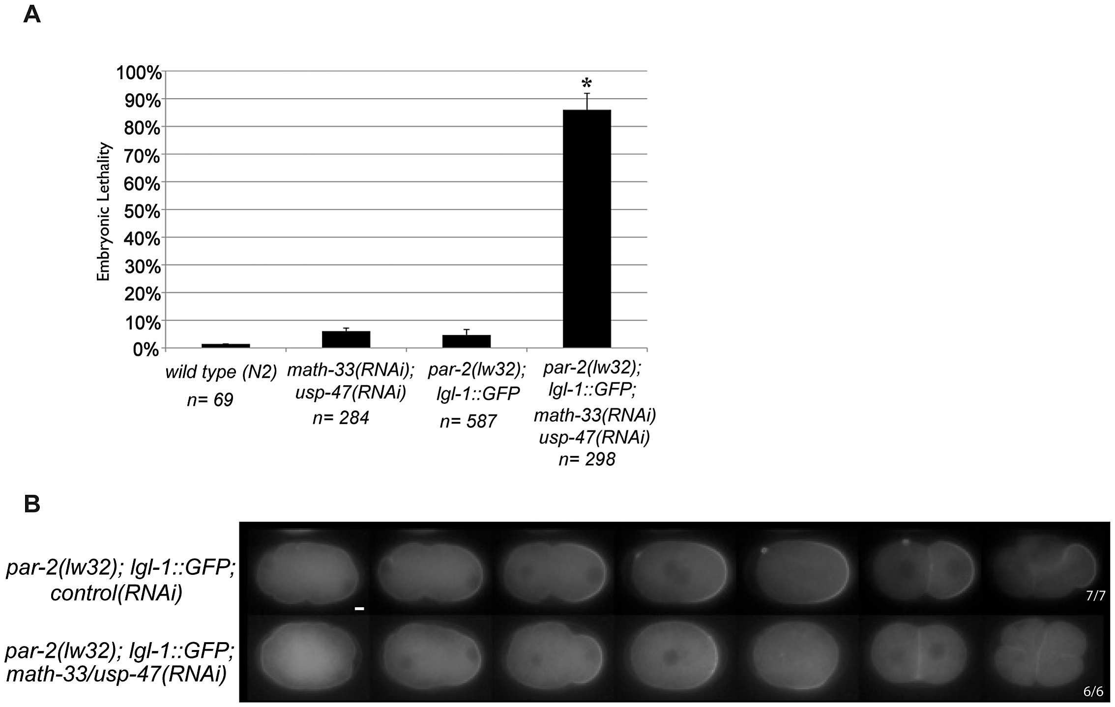 PAR-2 function is not required to mediate loss of polarity in <i>math-33(RNAi) usp-47(RNAi)</i>.