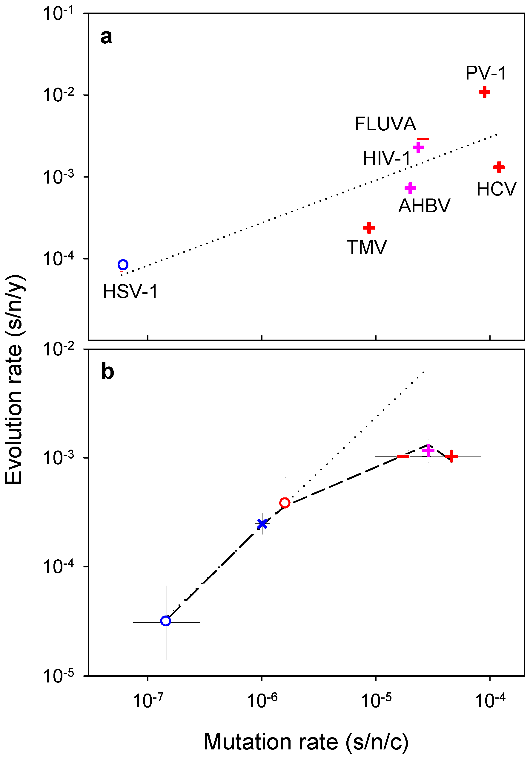 Relationship between mutation and evolution rates across viruses.