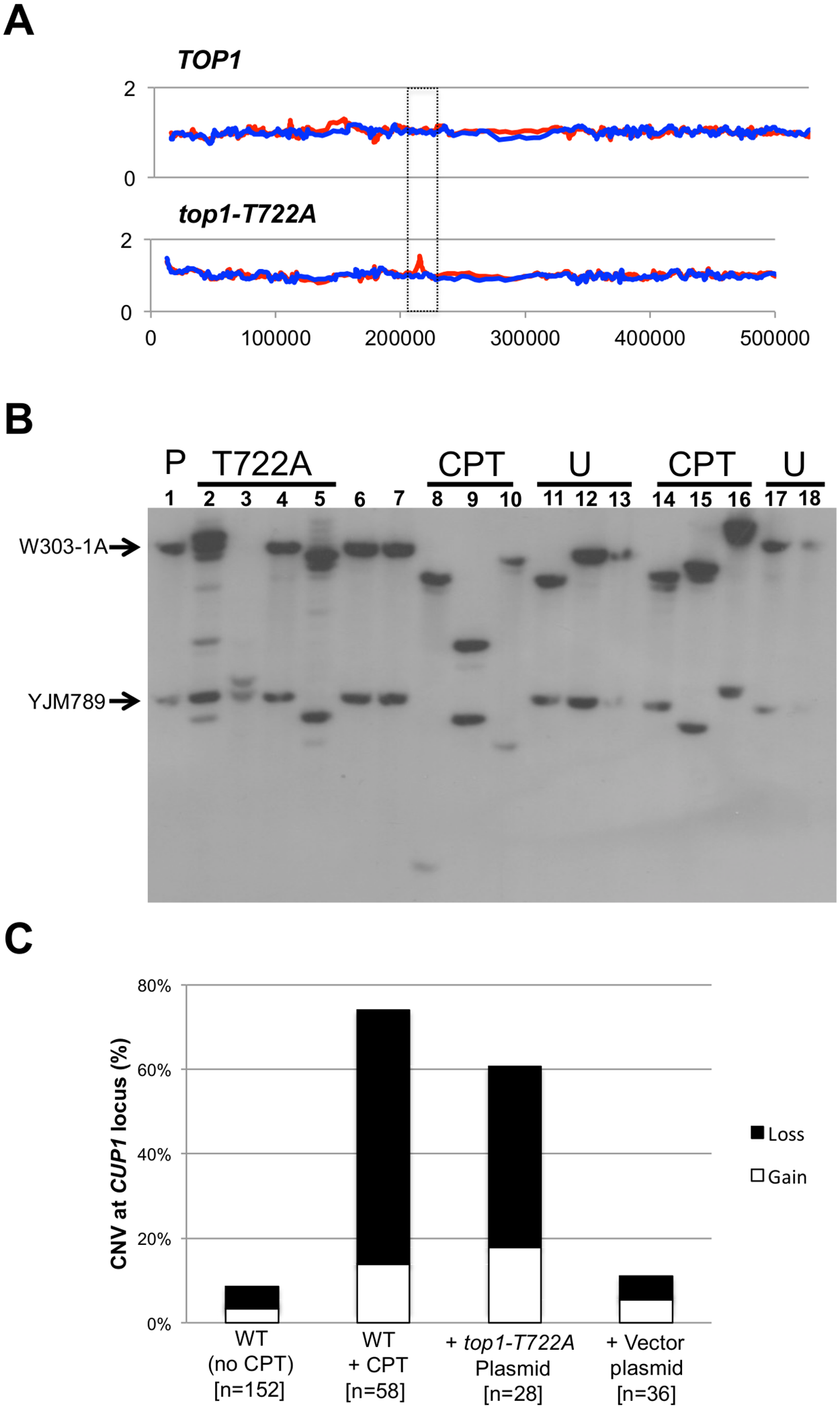 <i>CUP1</i> instability associated with CPT treatment or Top1-T722A expression.