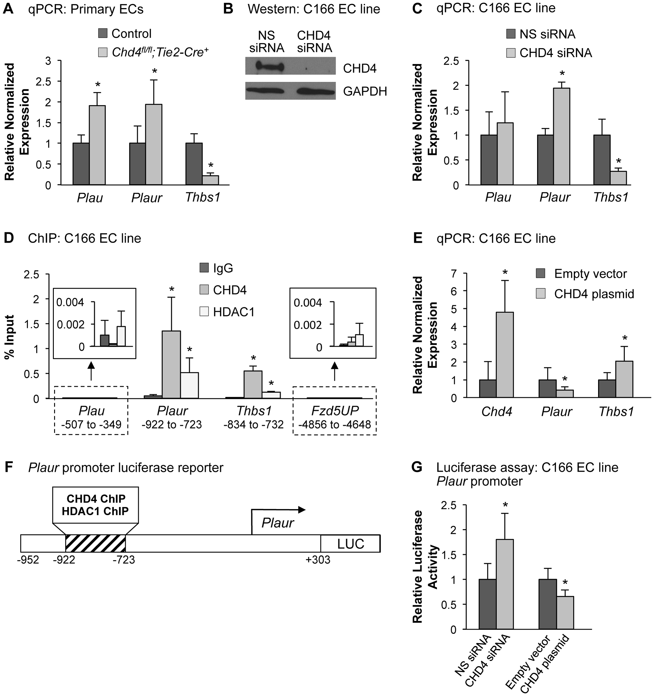 CHD4 differentially regulates <i>Plaur</i> and <i>Thbs1</i> expression in endothelial cells.