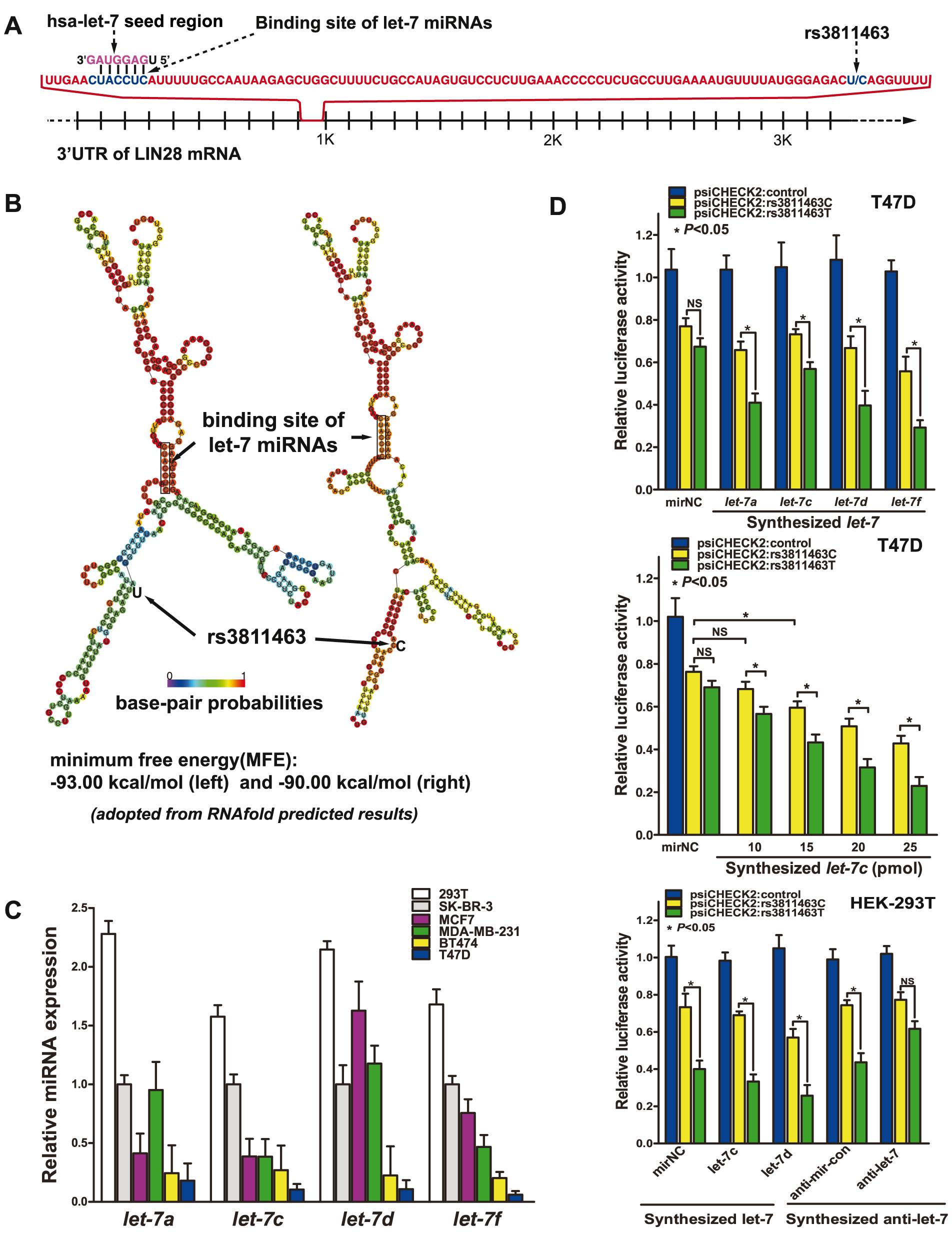 <i>Let-7</i> differentially regulates allelic variants of rs3811463.