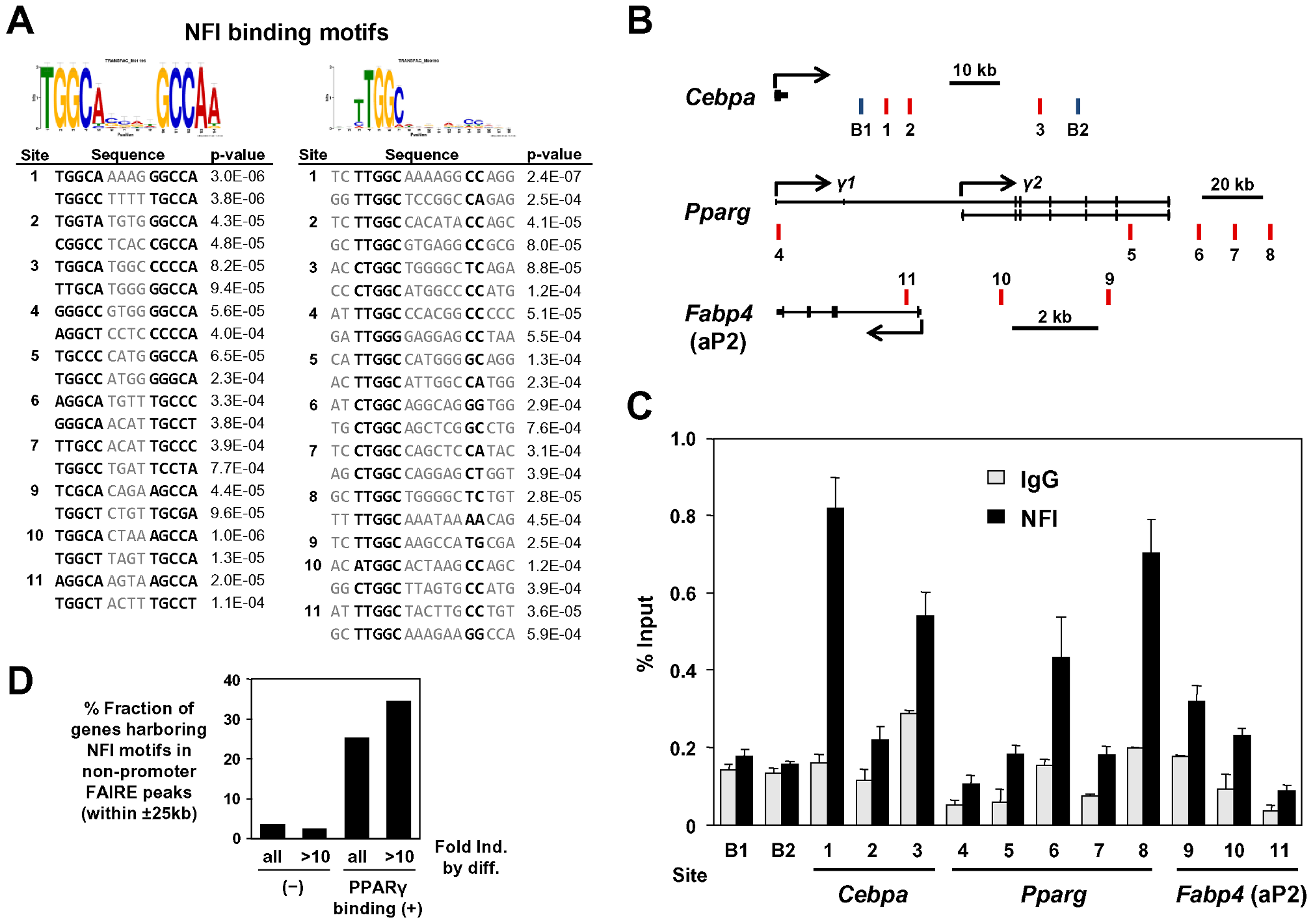 NFI occupy the adipocyte-specific FAIRE peaks and/or the PPARγ binding sites near PPARγ, C/EBPα, and aP2 genes.