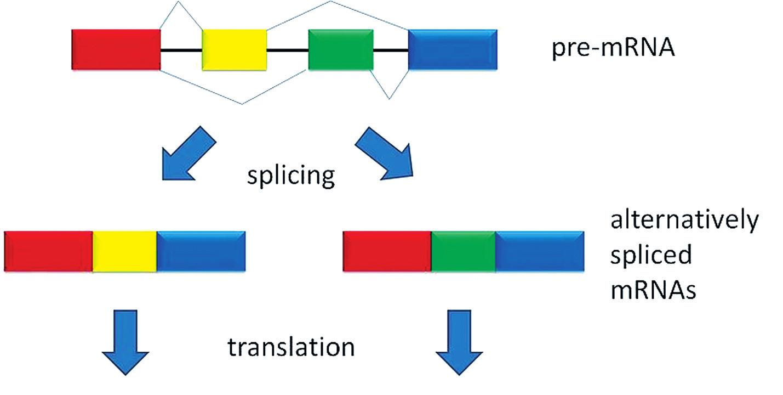 Alternativní splicing