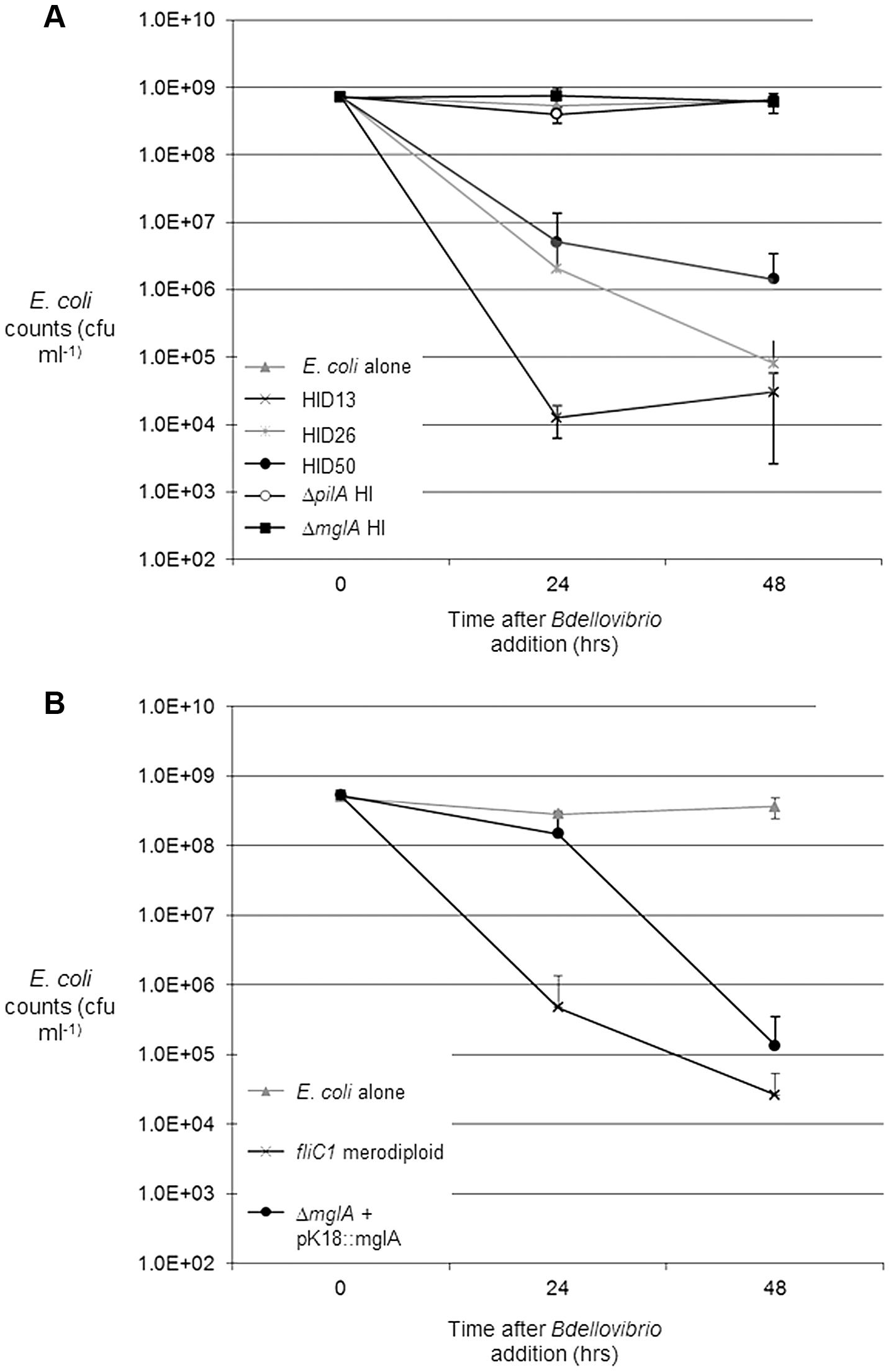 Predation and <i>in cis</i> complementation of <i>B. bacteriovorus <i>Δ</i>mglA</i> HI strains, on <i>E. coli</i> prey.