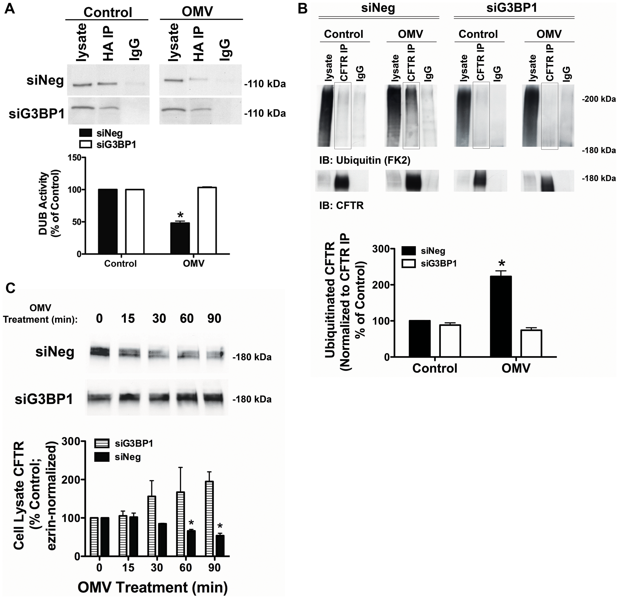 siRNA knockdown of G3BP1 eliminates Cif inhibition of USP10.