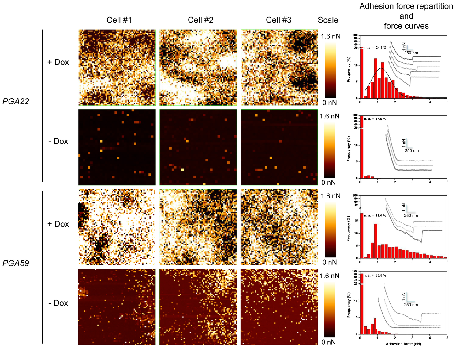 Atomic Force Microscopy-derived adhesion force measurements in single <i>C. albicans</i> cells overexpressing <i>PGA22</i> and <i>PGA59</i>.