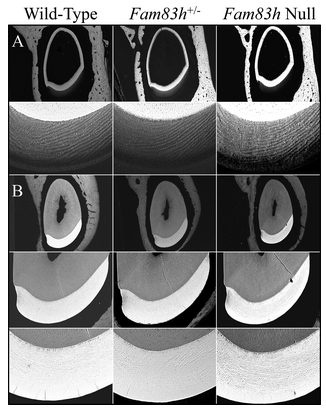Figure 6. 