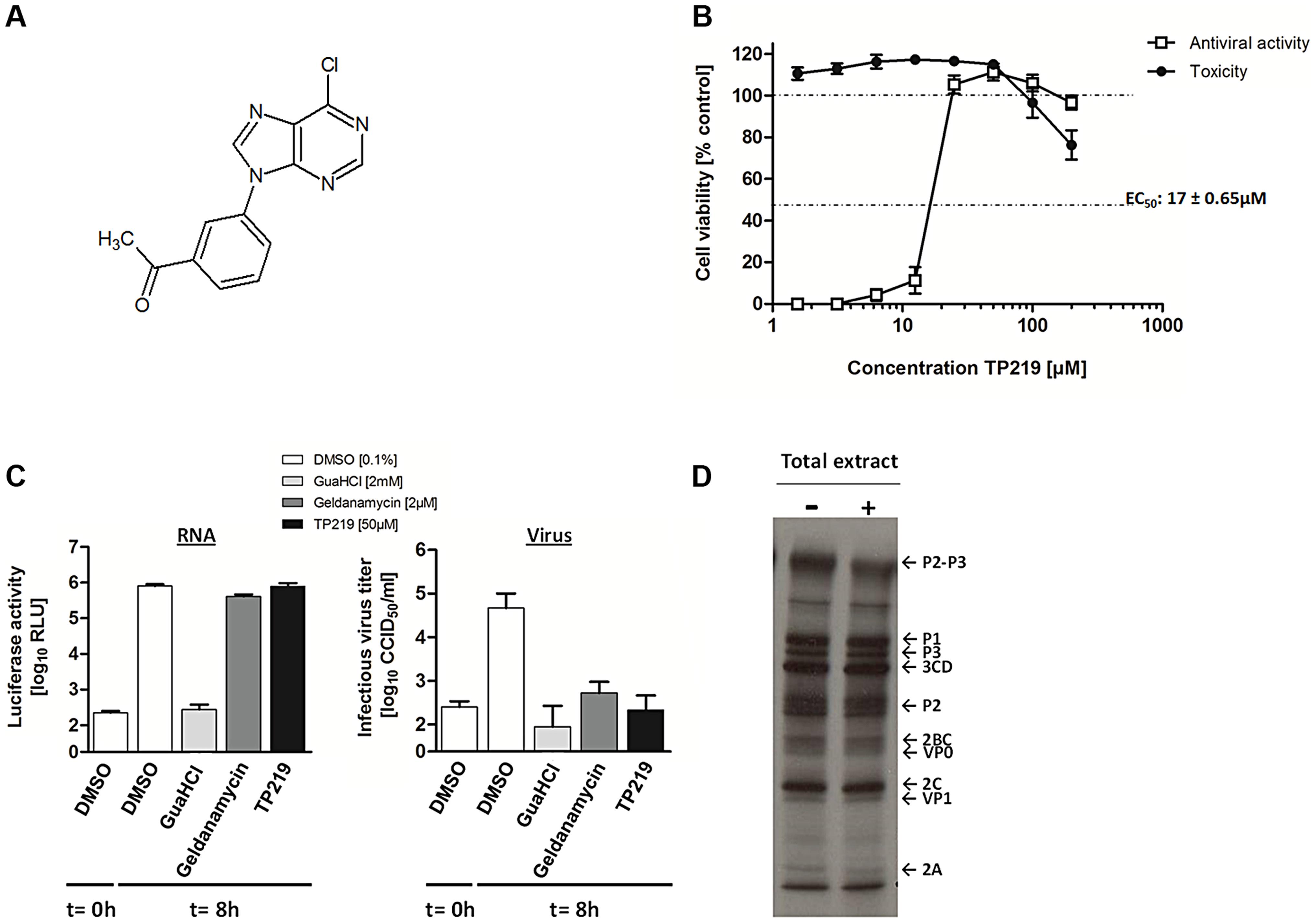 TP219 inhibits virus morphogenesis.
