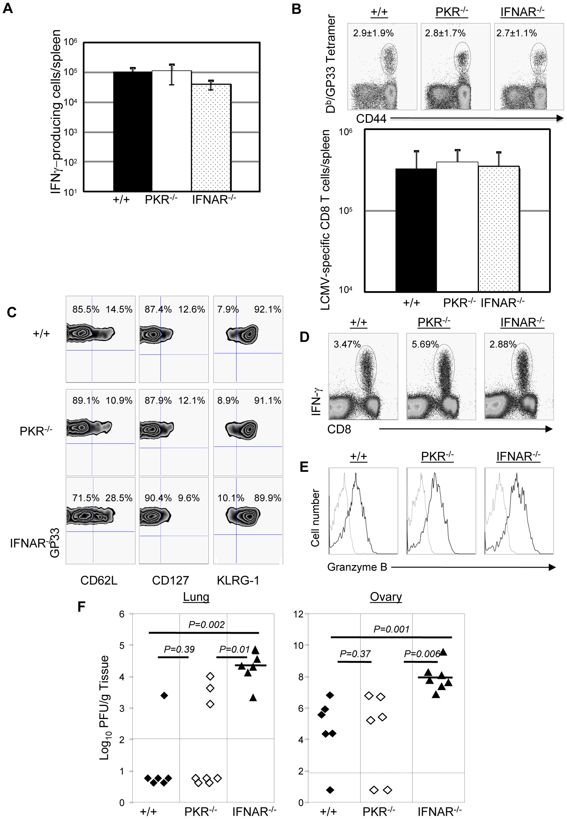 Secondary expansion of GP33-specific CD8<sup>+</sup> T cells and protection against vaccinia virus in +/+, PKR<sup>−/−</sup>, and IFNAR<sup>−/−</sup> mice.