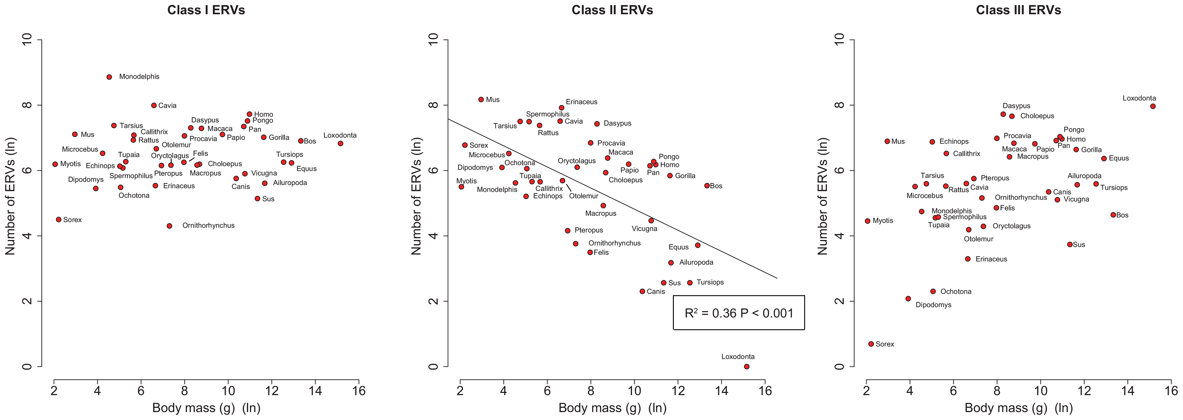 Correlations of number of ERVs against body mass (both log-transformed) by ERV class.