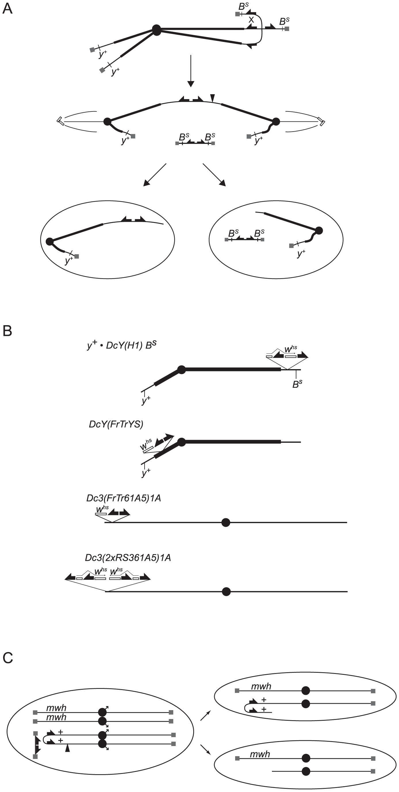 Graphical depiction of assays and chromosomes employed in this work.