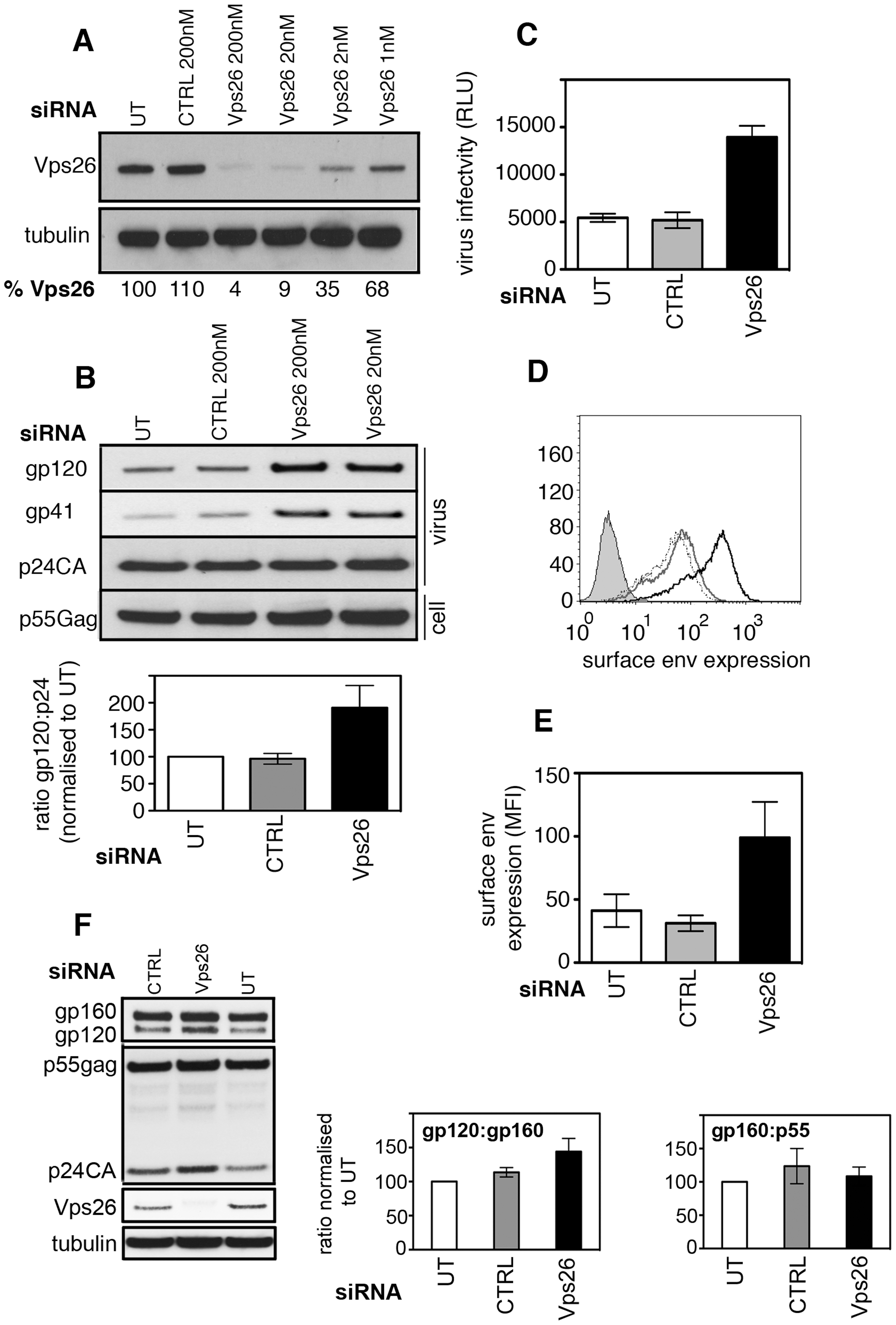 Vps26 depletion increases plasma membrane expression of HIV-1 Env and incorporation into viral particles.