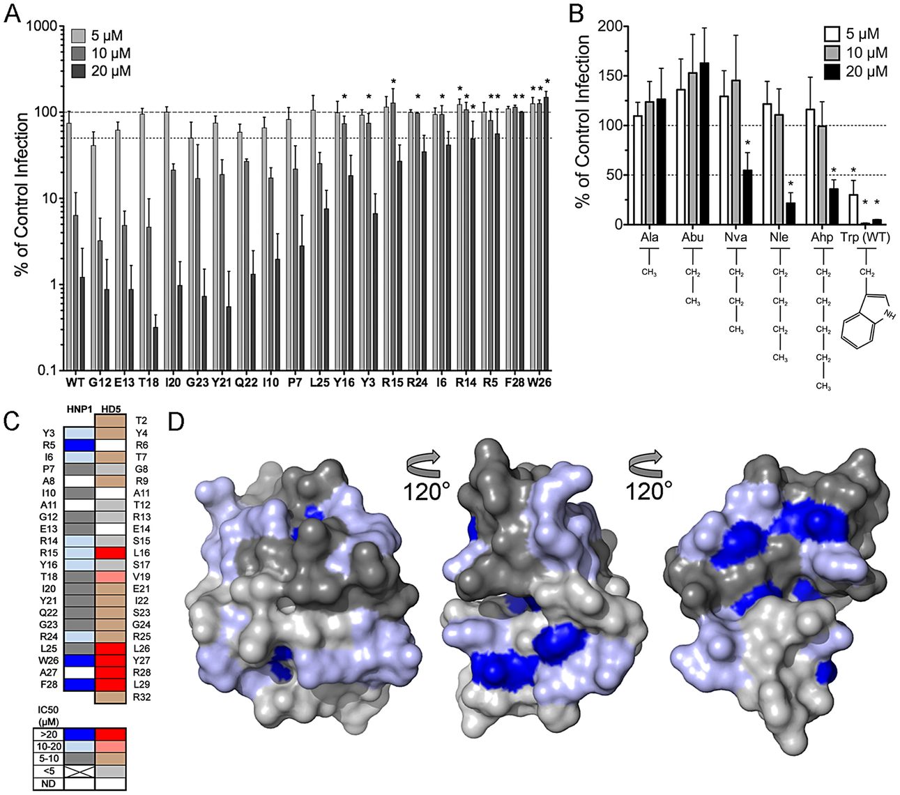 Anti-viral activity and model of HNP1 alanine scan mutants.