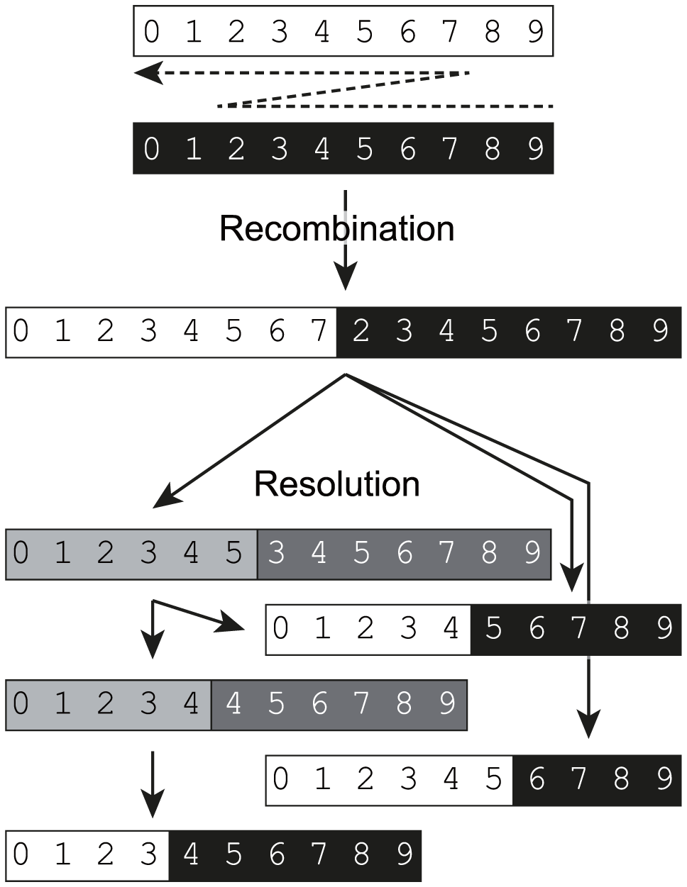 A biphasic model for replicative recombination in enteroviruses.