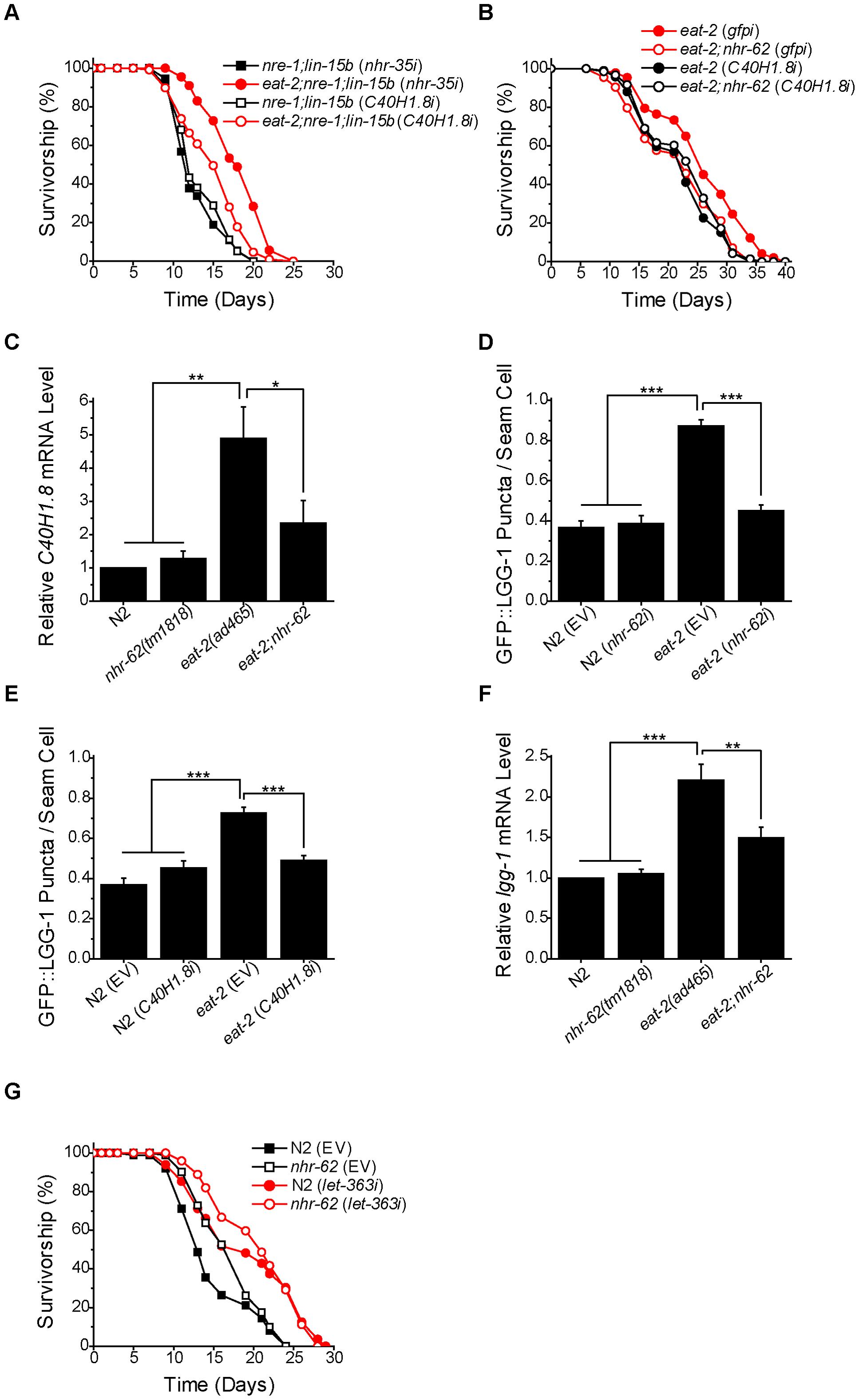 <i>nhr-62</i> regulates a DR-induced lipase and autophagy.