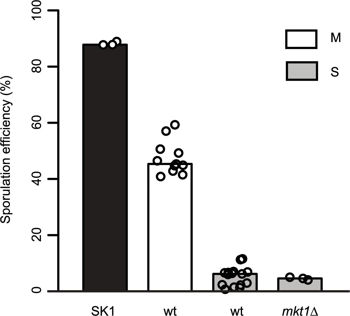 Role of <i>MKT1</i> allele in sporulation efficiency variation.
