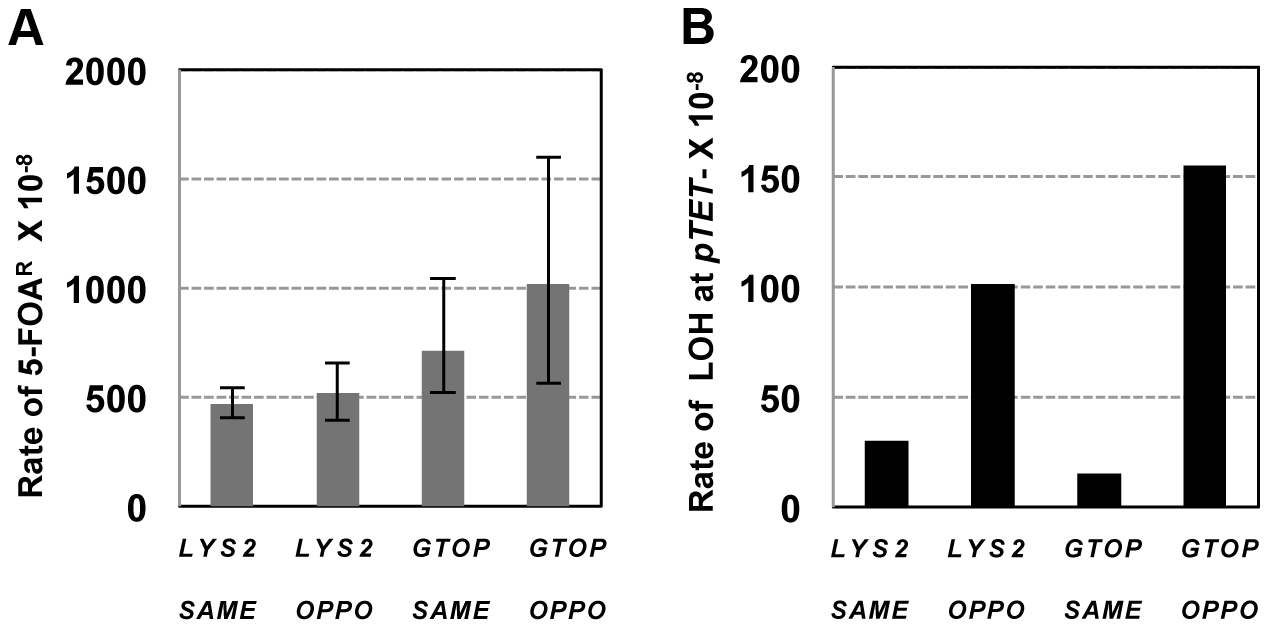 The rates of loss of heterozygosity on CHR3 in <i>wild-type</i> backgrounds.
