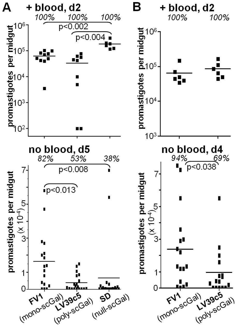 Galactosylated LPG does not ensure survival of <i>L. major</i> promastigotes in Jordan Valley strain <i>P. papatasi Ppap</i>J sand flies.