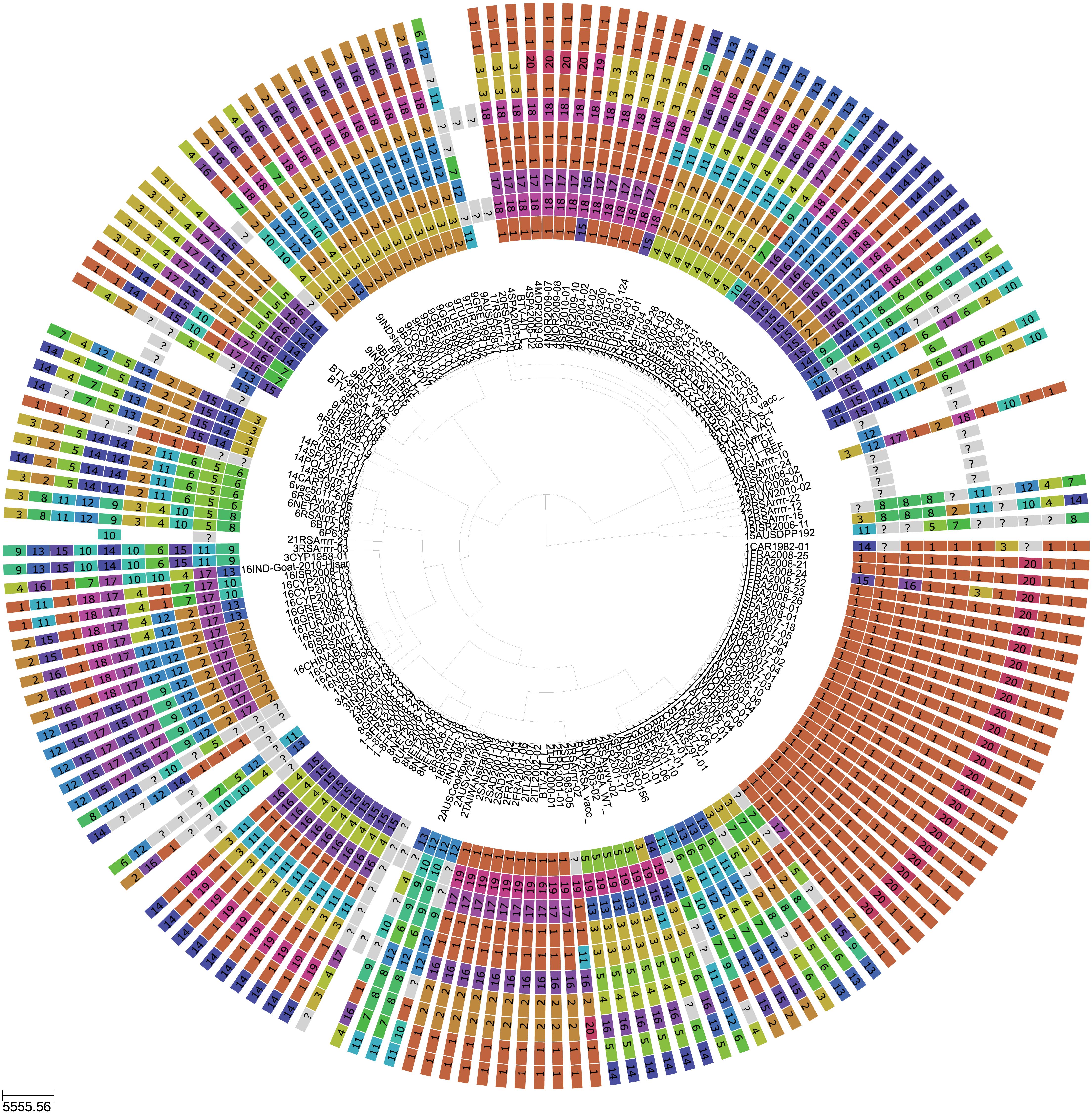Phylogeny of BTV Seg-2 and inferred genomic reassortment patterns.