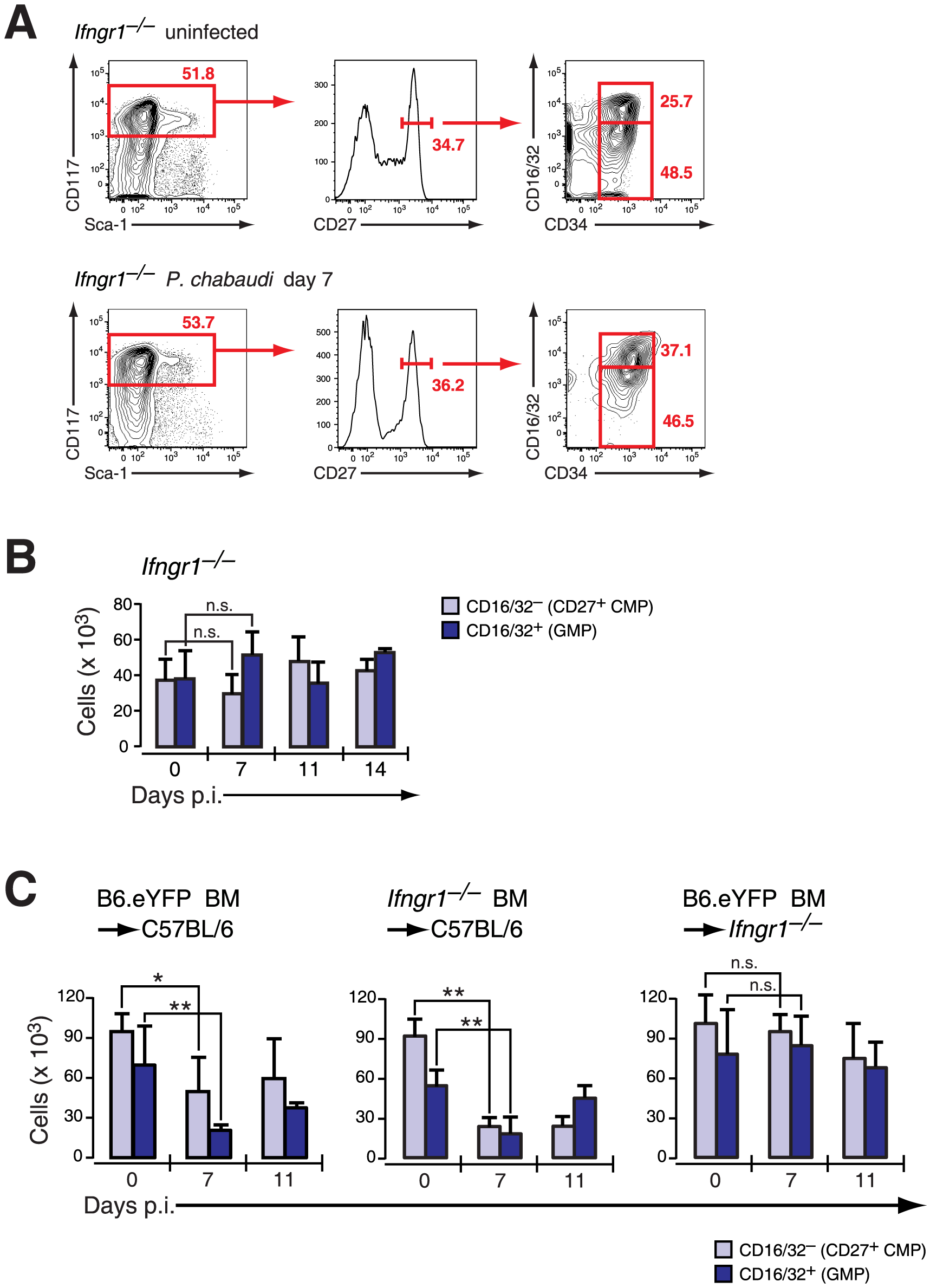 Infection-induced decrease of early myeloid progenitors is critically dependent on IFN-γ signaling.
