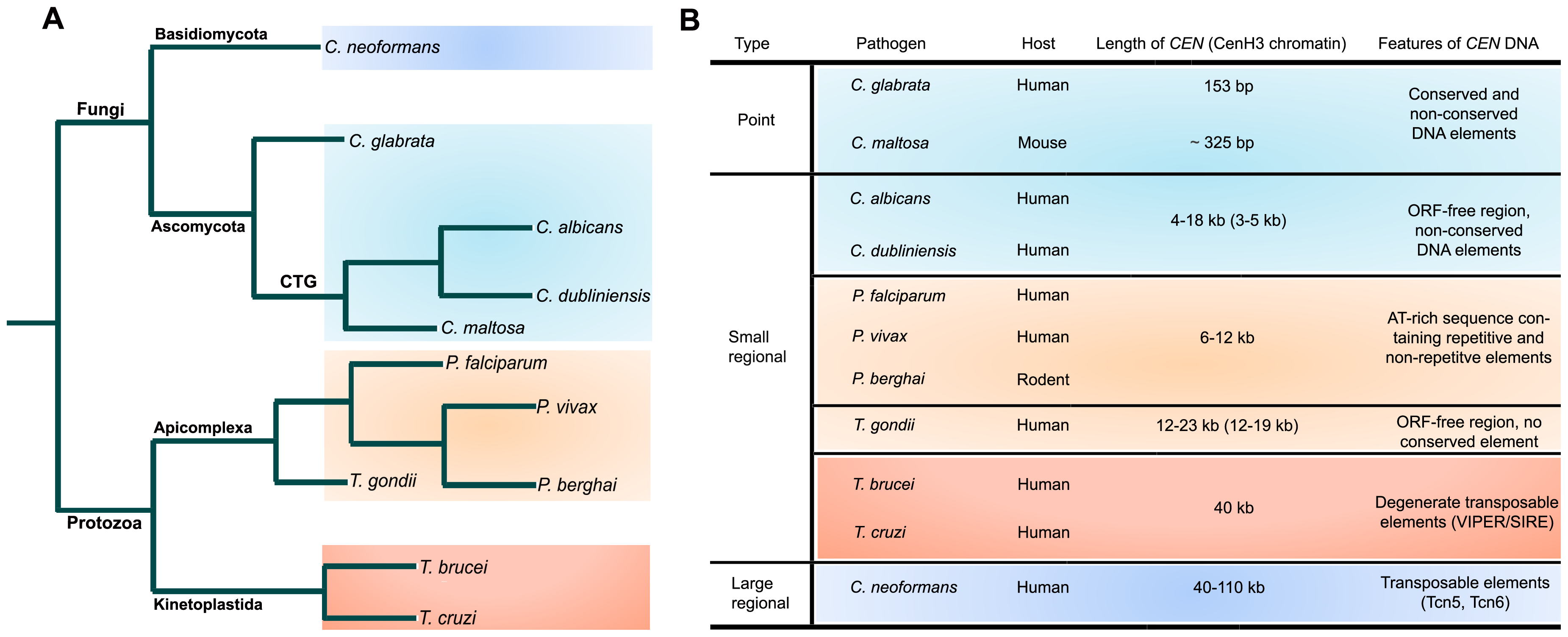 Structural organization of centromeres in various microbial pathogens.