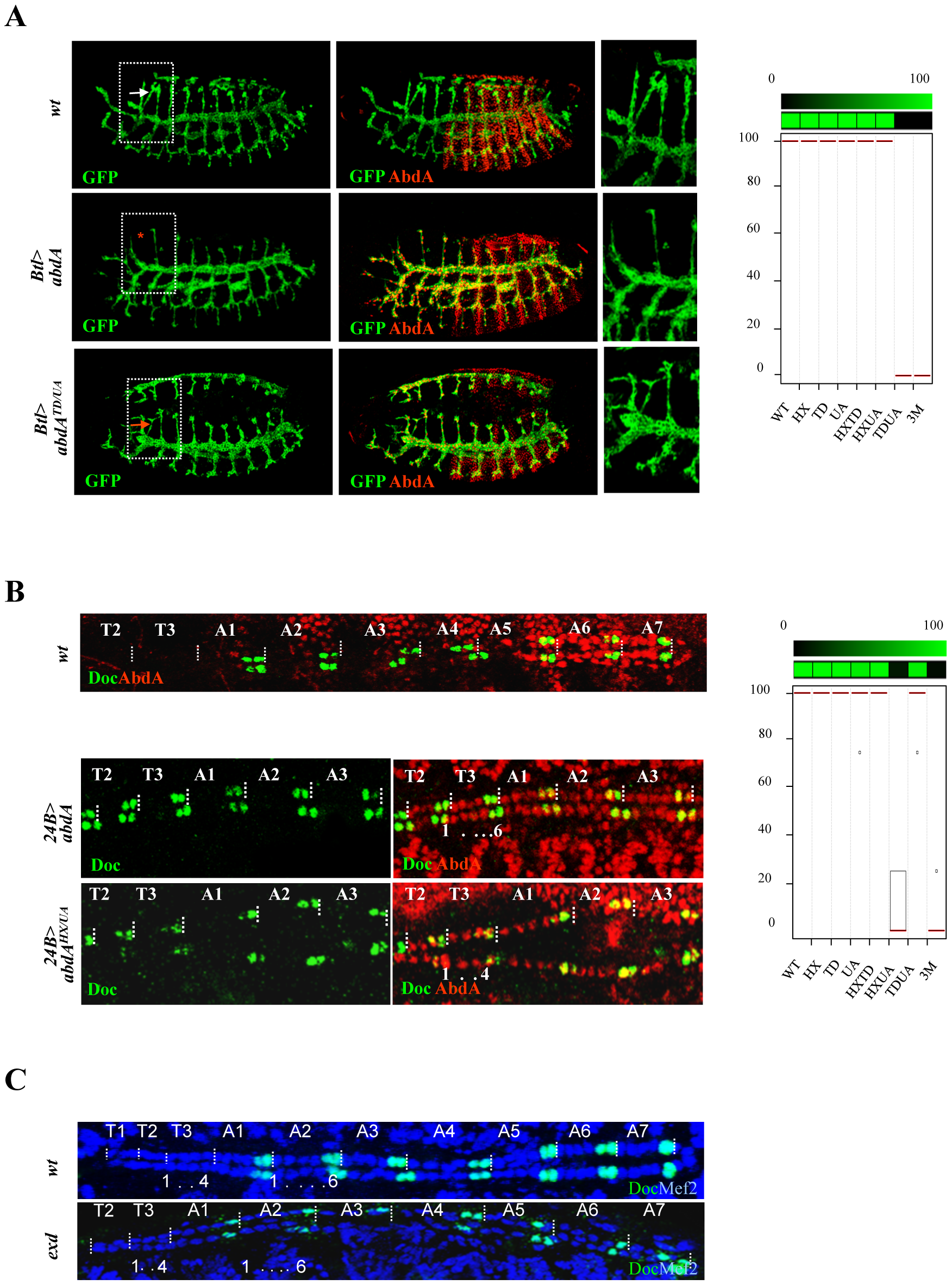 Functional redundancy of the HX, TD, and UA protein domains.