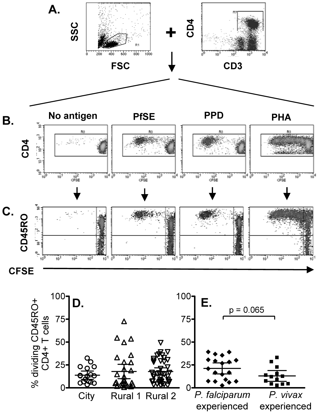 Flow cytometric characterization, frequencies and longevity of memory CD4 T cells proliferating in response to PfSE.