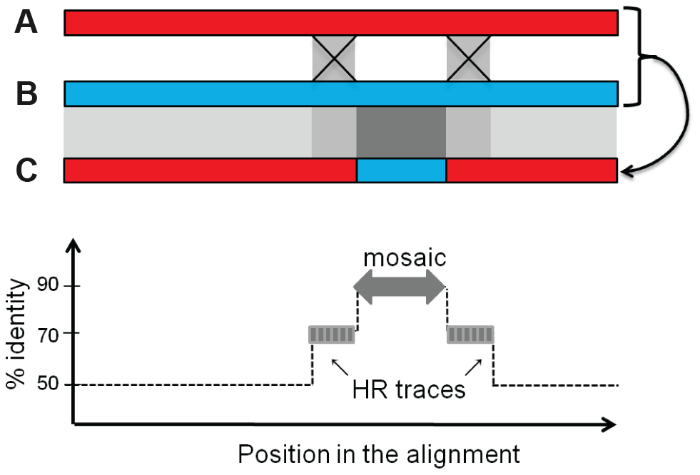 Rationale for the bio-informatics detection of mosaics.