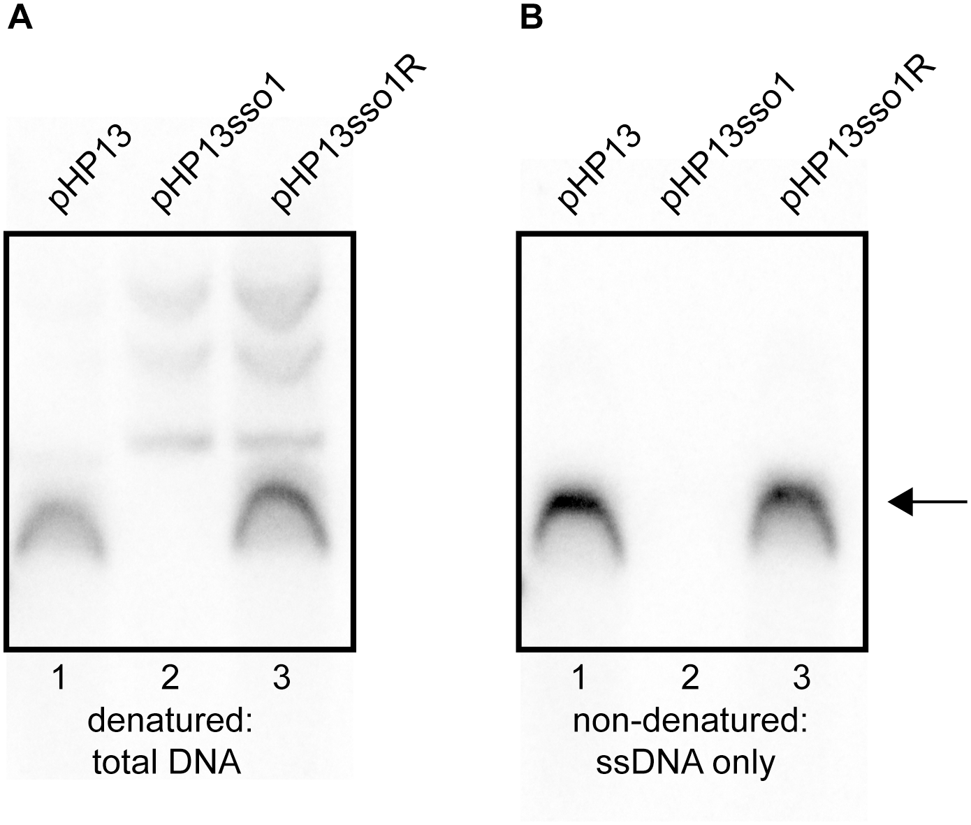 Southern blot analysis demonstrates that <i>sso1</i> decreases the amount of plasmid ssDNA.